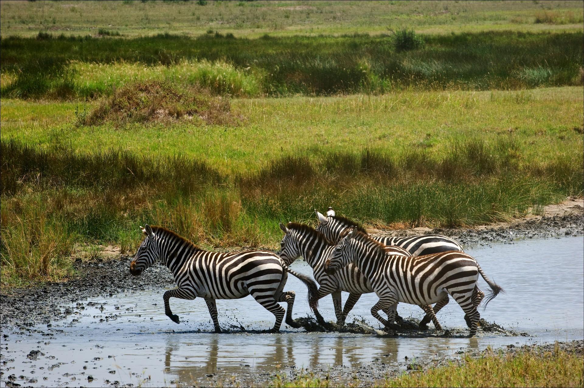 Wildlife in Kololo Game Reserve