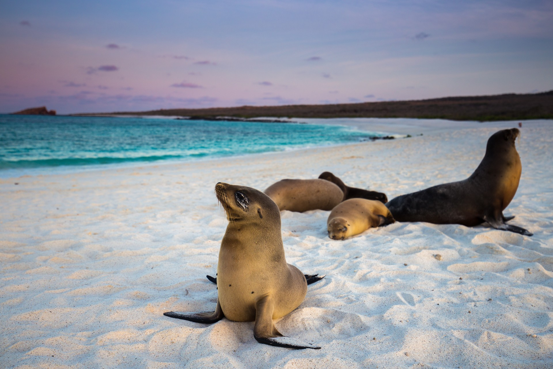 Ultimate holiday destinations: Galapagos Sea Lions