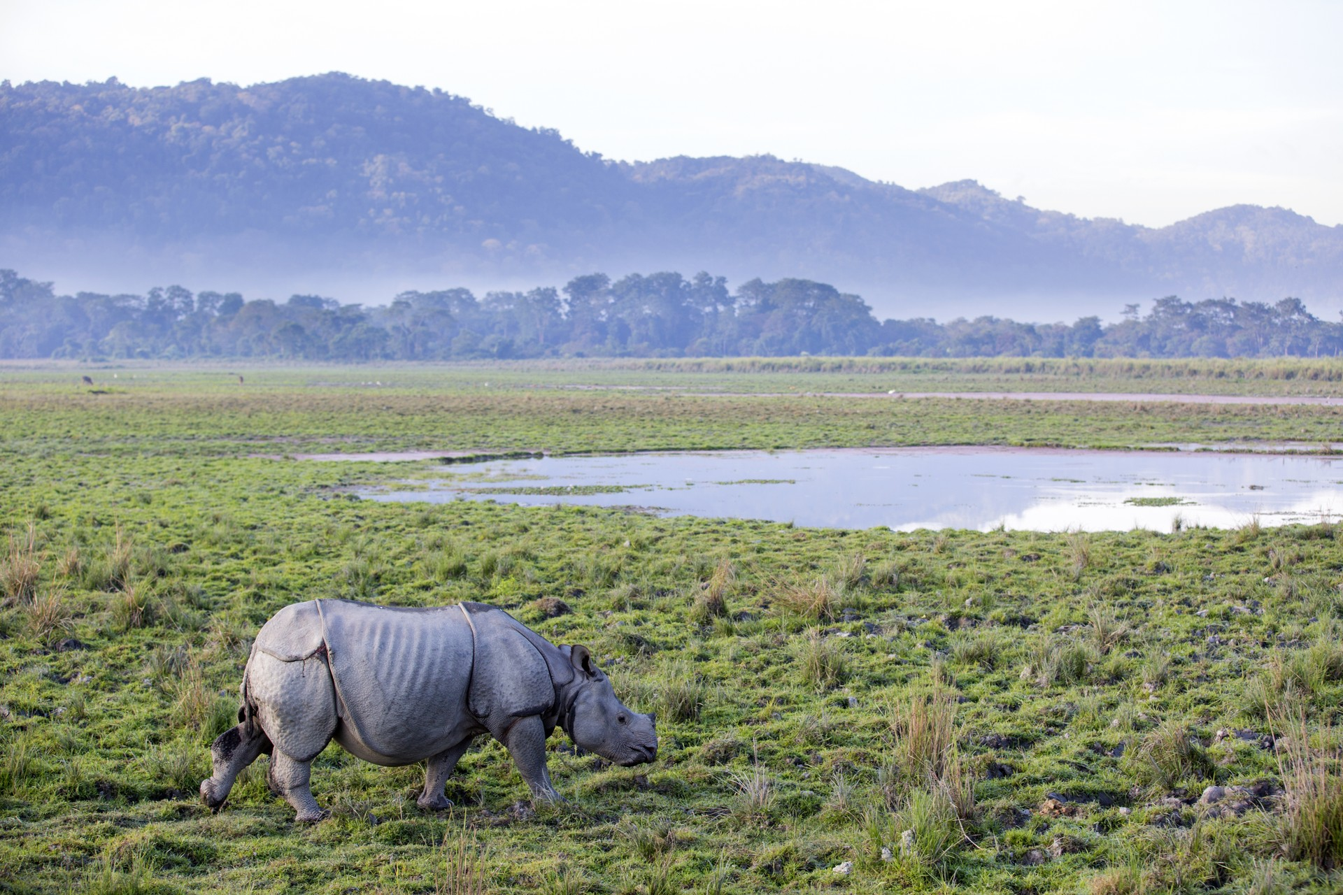 Top 10 scenic journeys: Kaziranga National Park