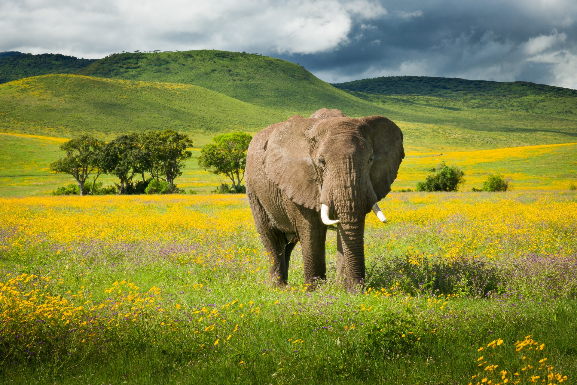 An elephant traverses the plains of the Selous Reserve, Tanzania