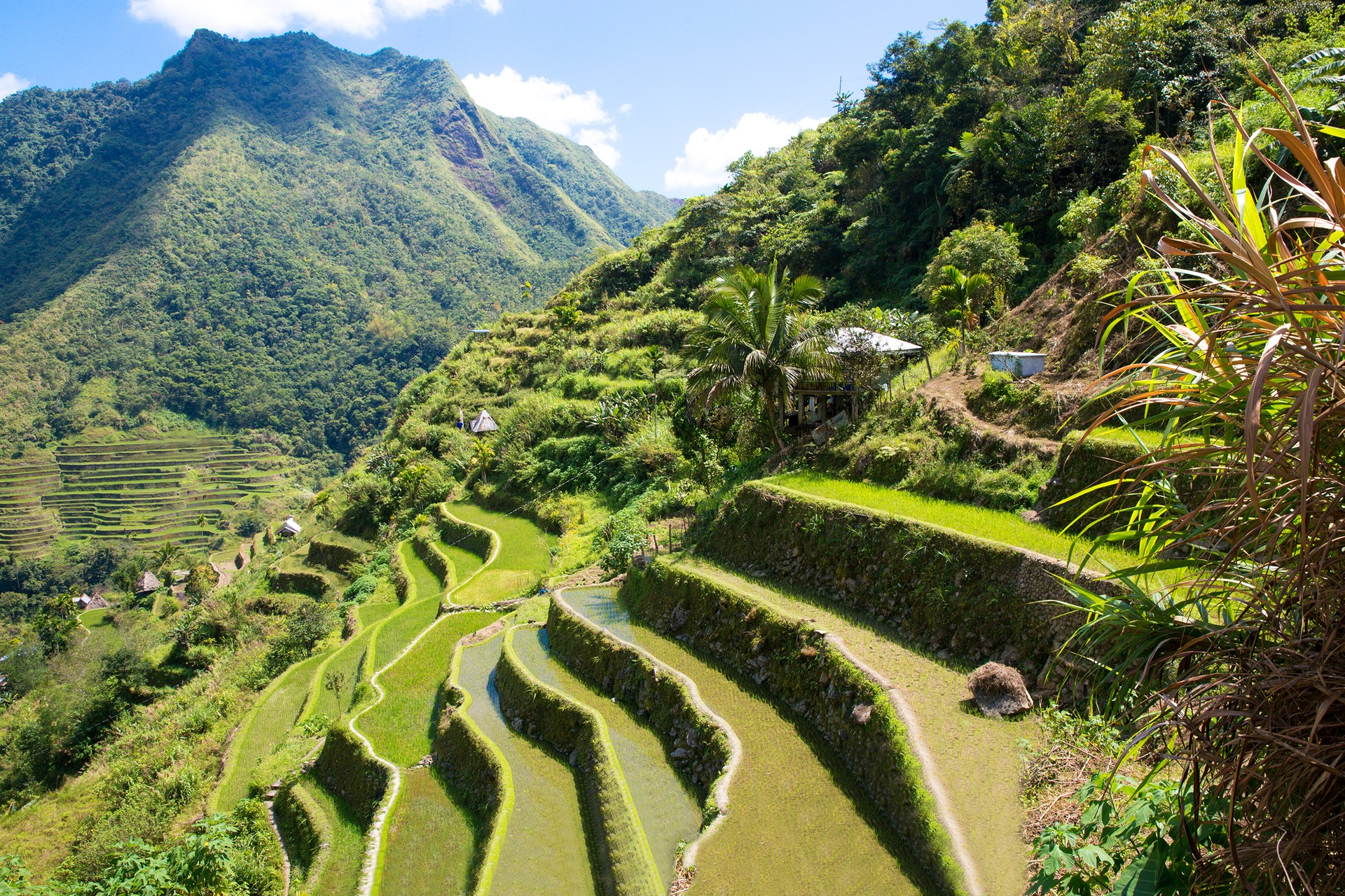 The sloping rice terraces of Banaue