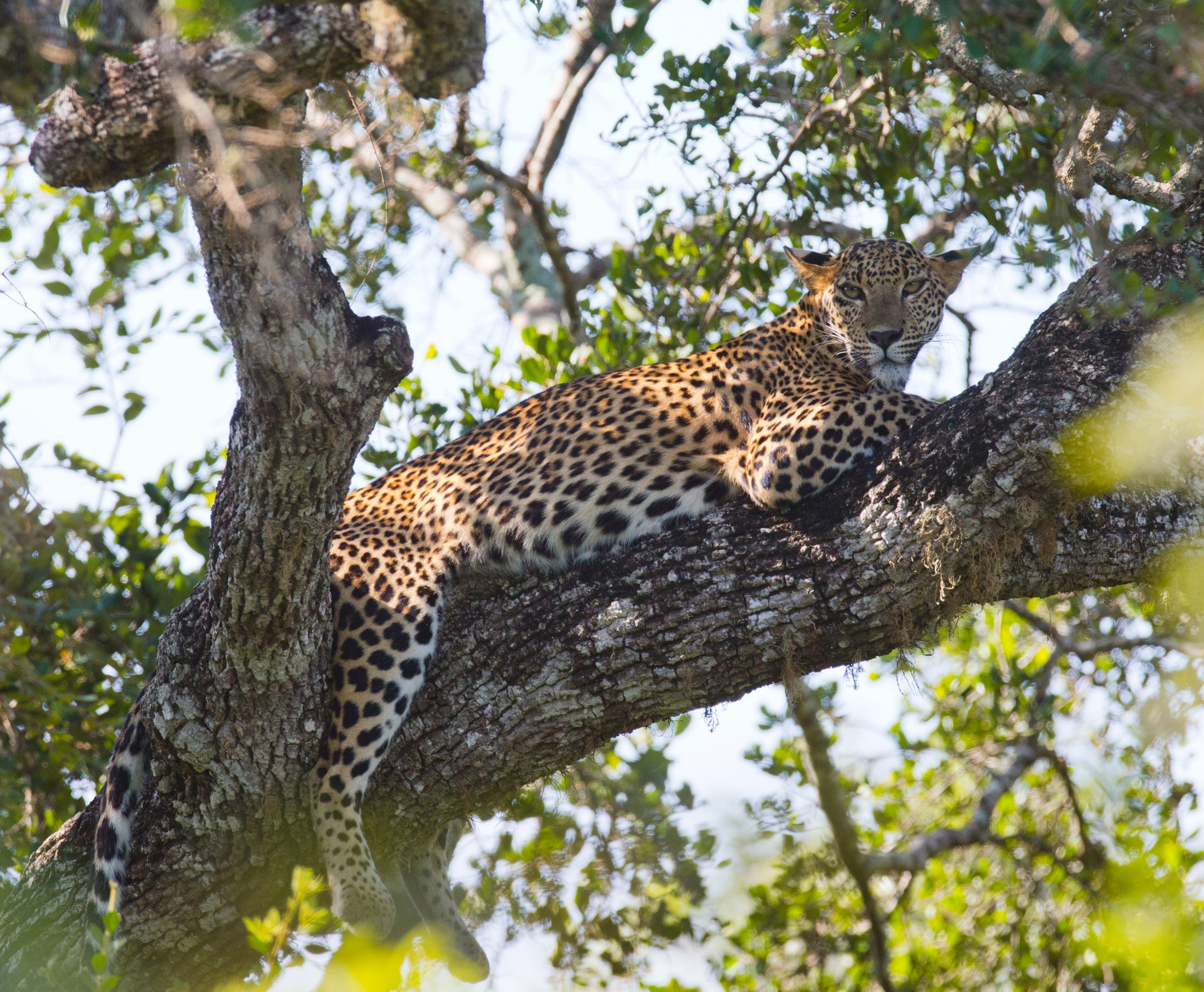 Where to go for some winter sun: Yala National Park