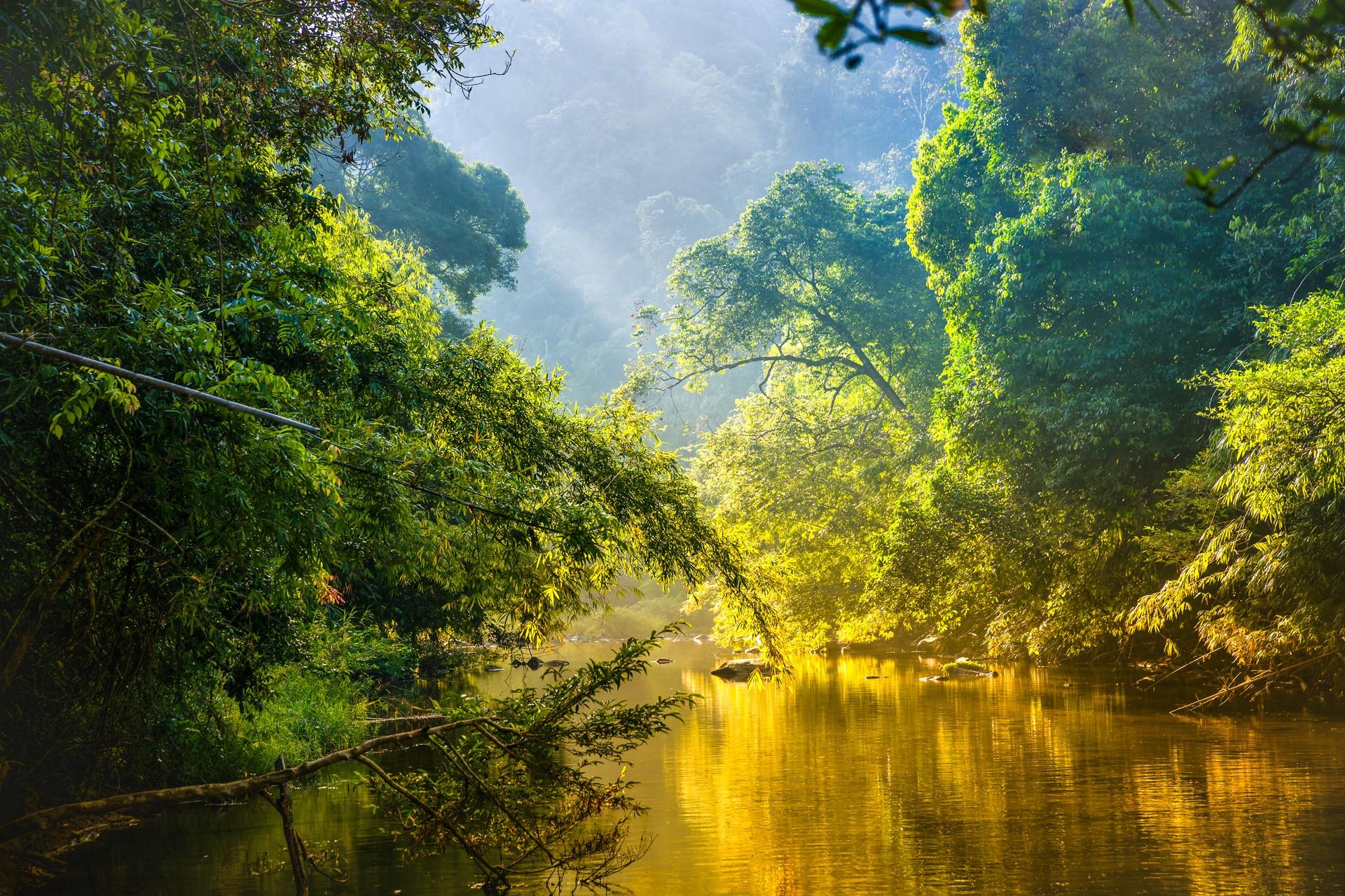 Best of both worlds: Amazon Rainforest