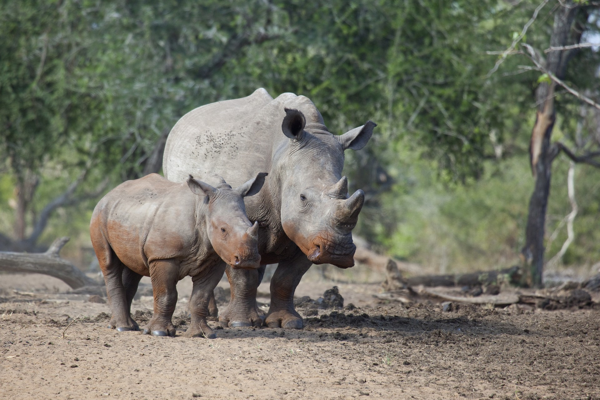 Rhino in iSimangaliso Wetland Park - South Africa holidays