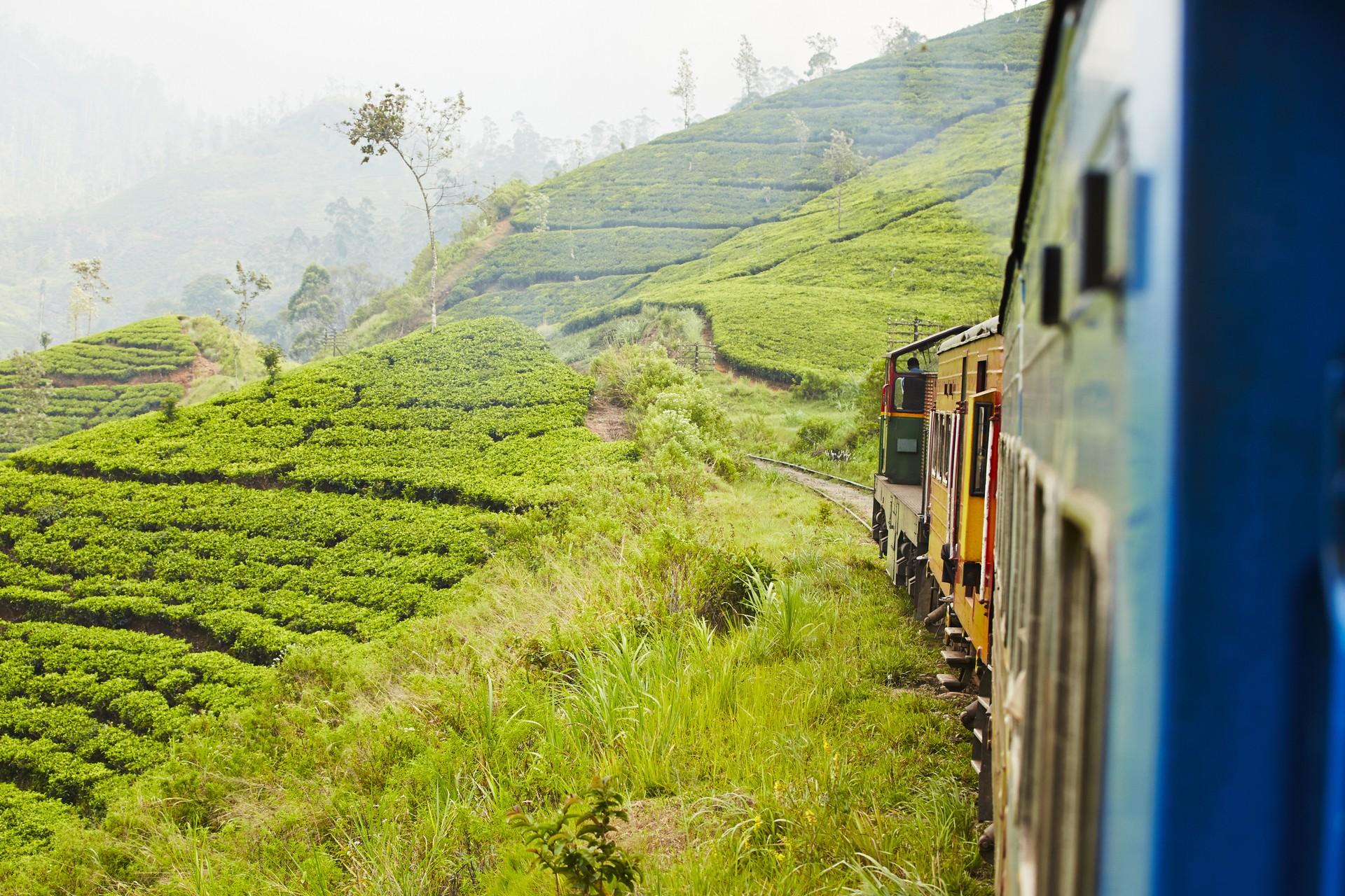 Top 10 scenic destinations: Ella tea plantations