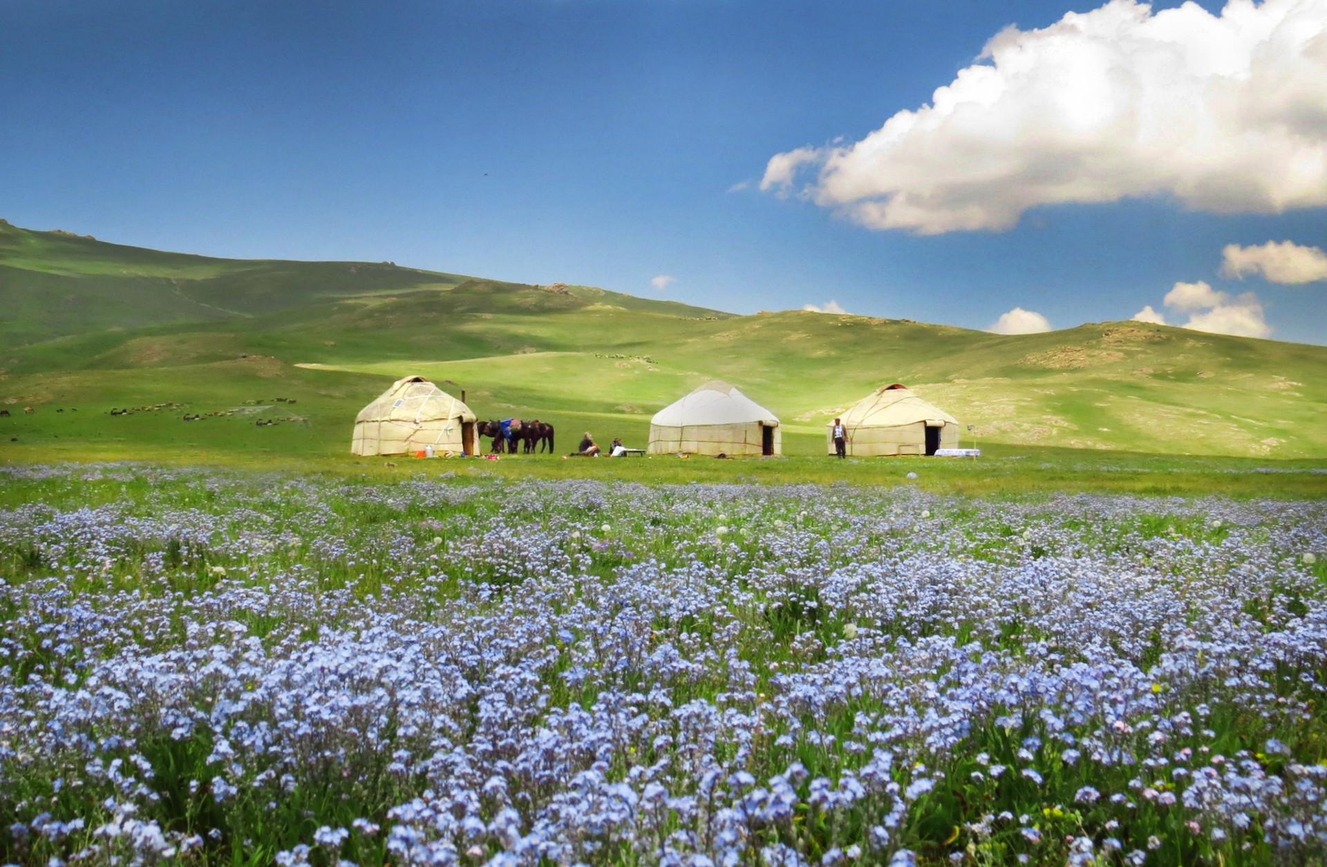 Yurts in the countryside of Kyrgyzstan