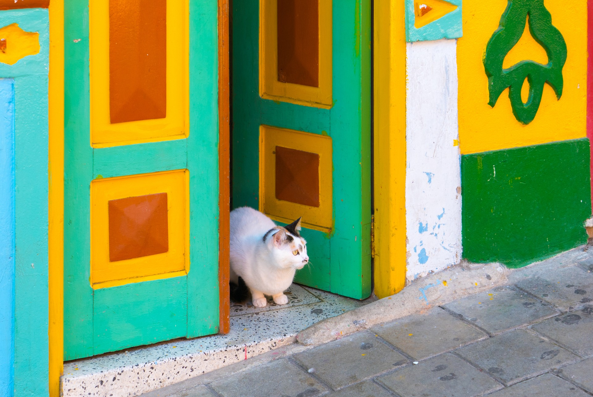 Cat in Guatape doorway, Colombia