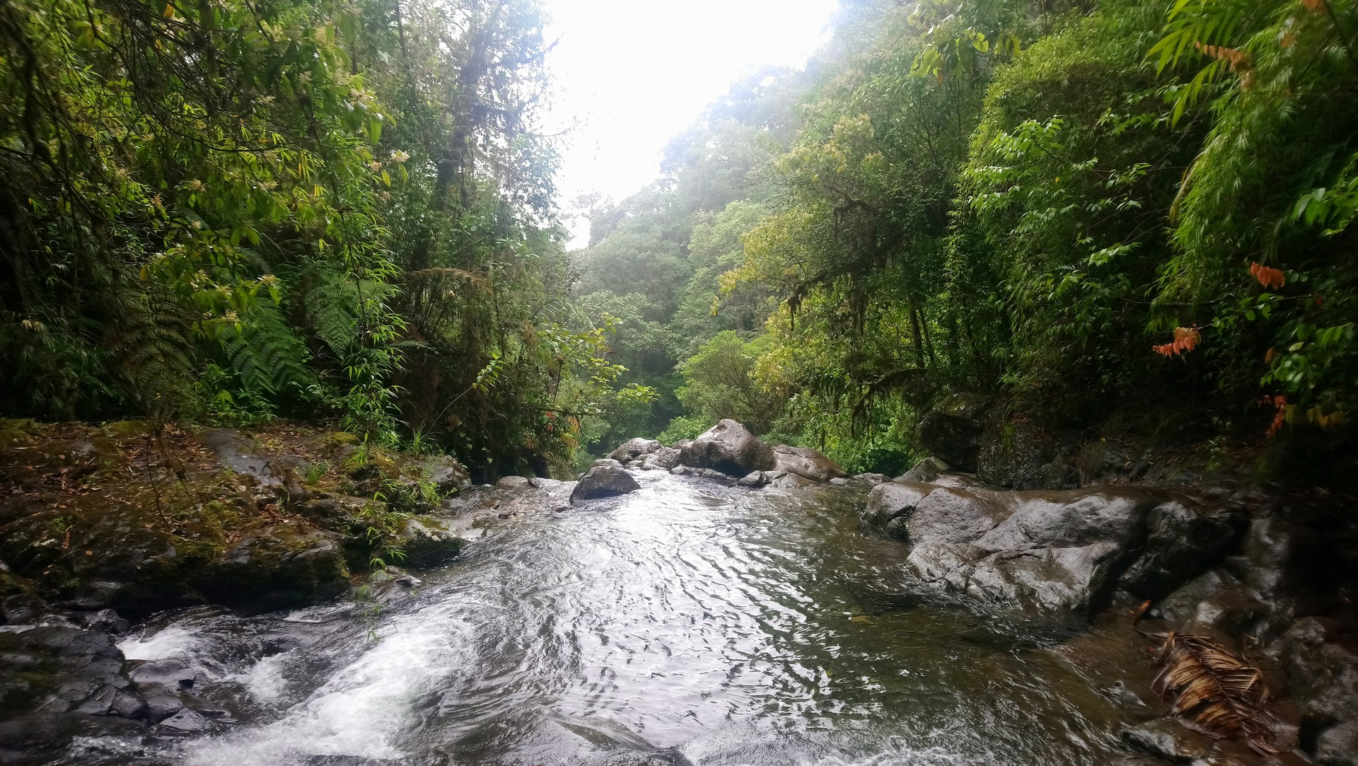 In The Cloud Garden, Tom Hart Dyke makes his way into the impenetrable Darien Gap in search of rare orchids