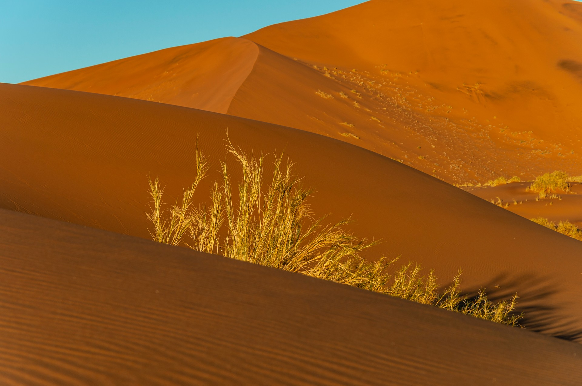 A sand dune in the Kgalagadi Transfrontier National Park