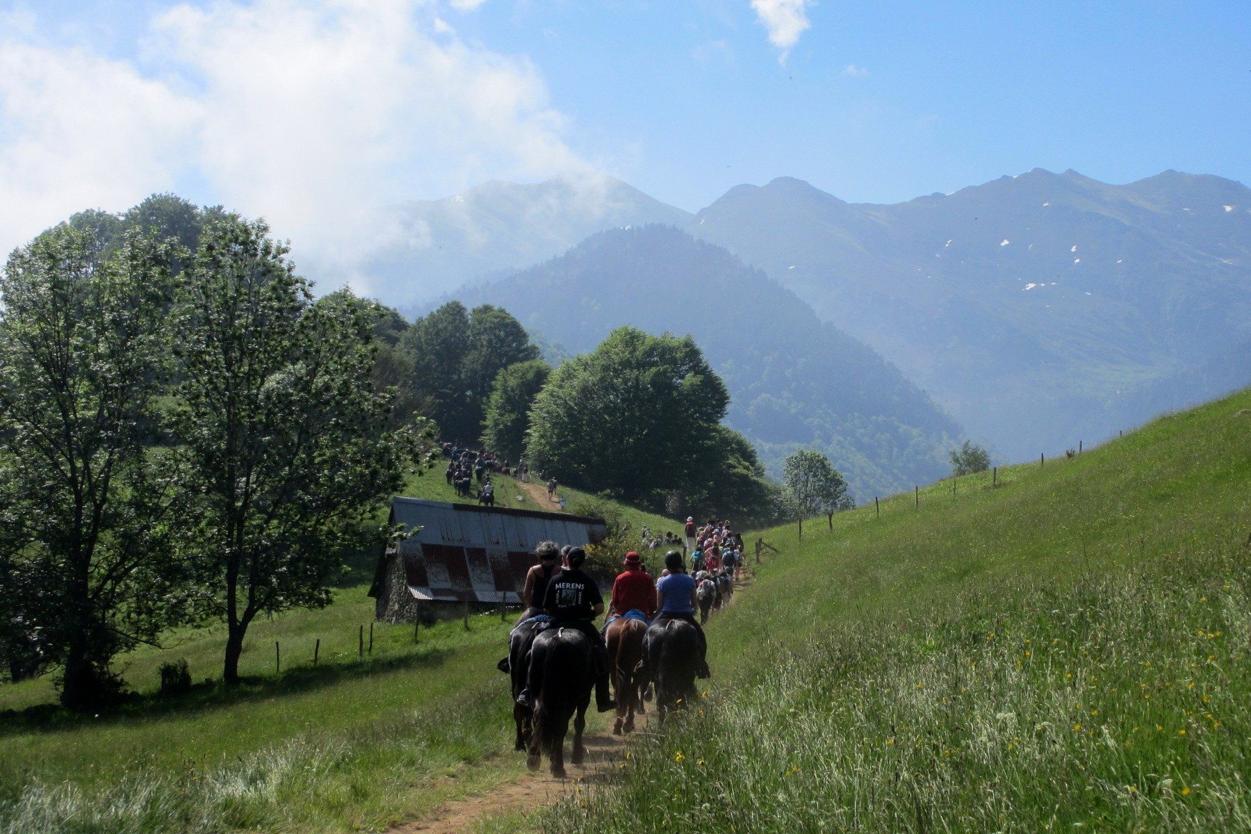 Following Meren horses during transhumance tradition