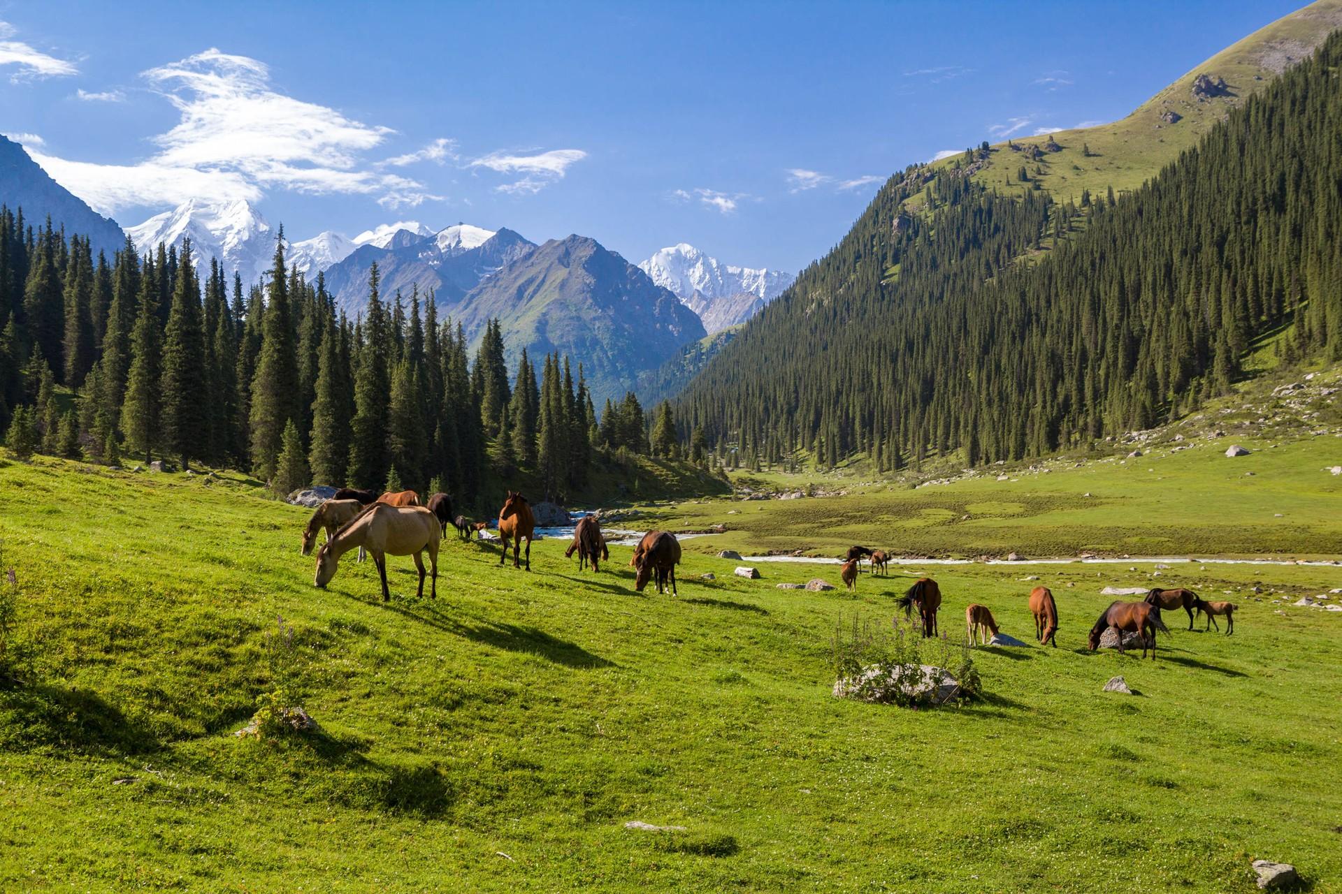 Horses grazing in Tien Shan