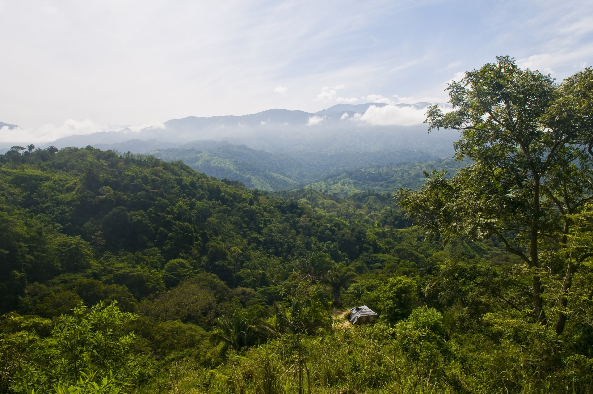 Rainforest of Tayrona National Park, Colombia