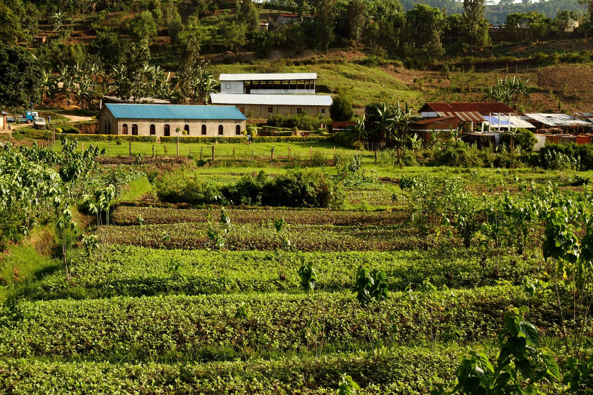 Farm in Rwanda