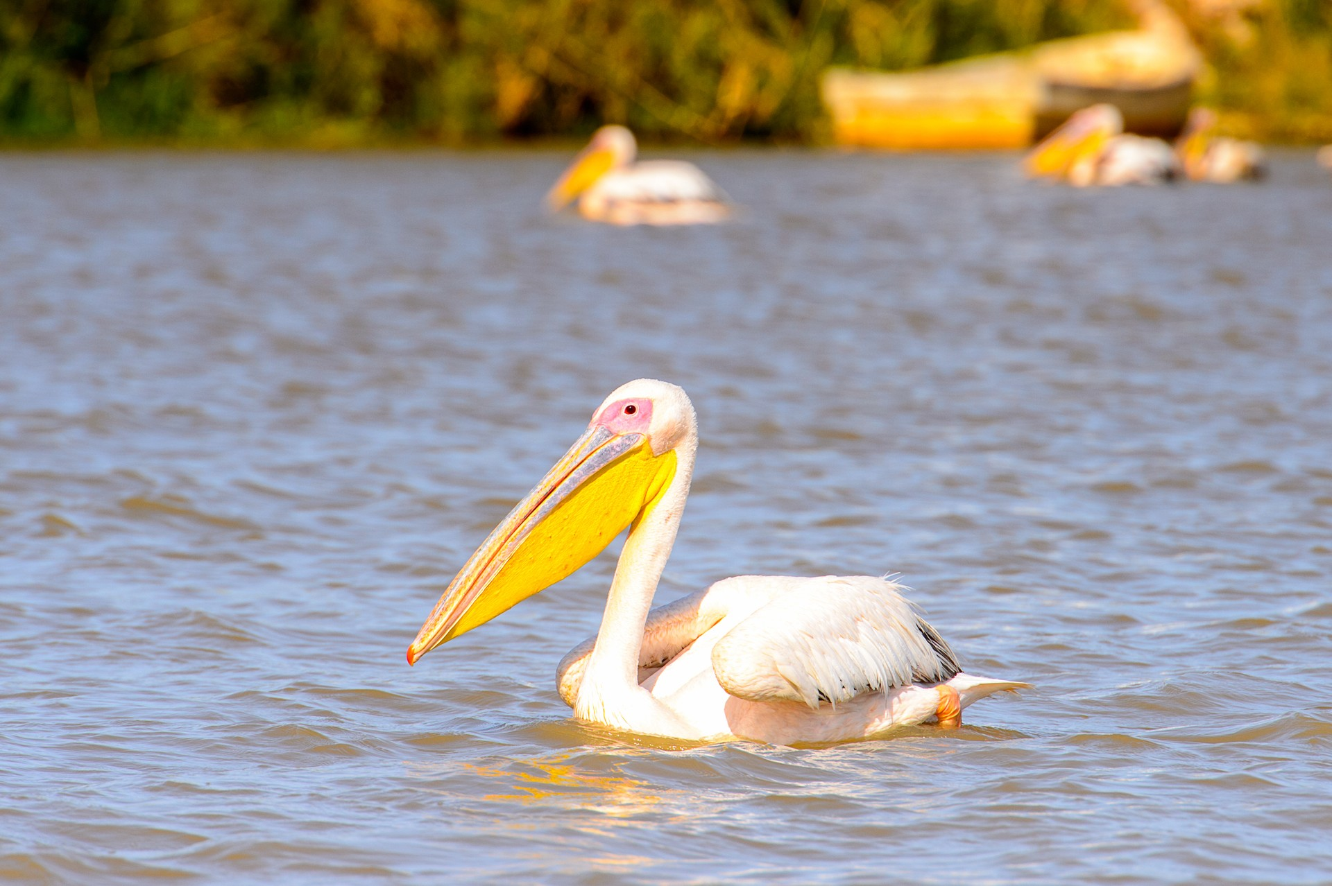Where to go for some winter sun: Djoudj National Bird Sanctuary