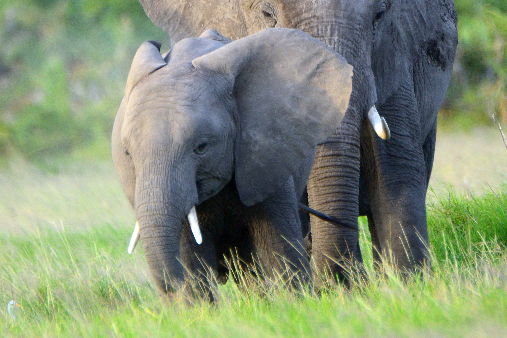 A baby elephant in the Selous Reserve, Tanzania