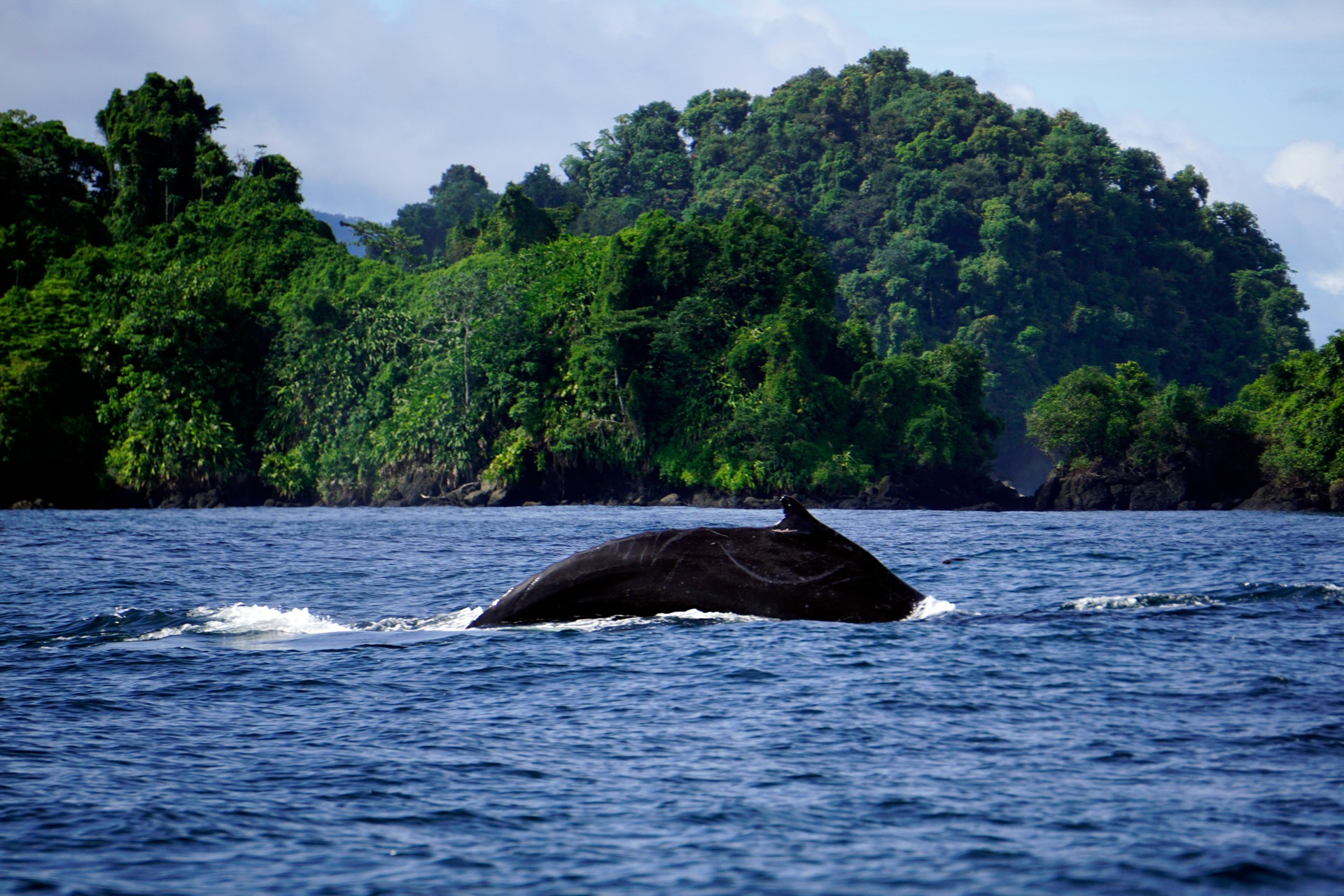 Whale on Colombian coast