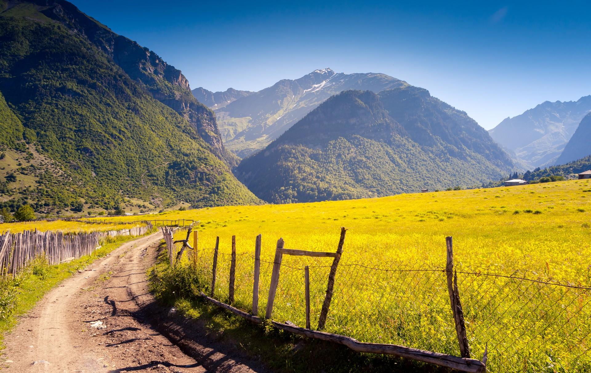 The yellow fields of the Svaneti region