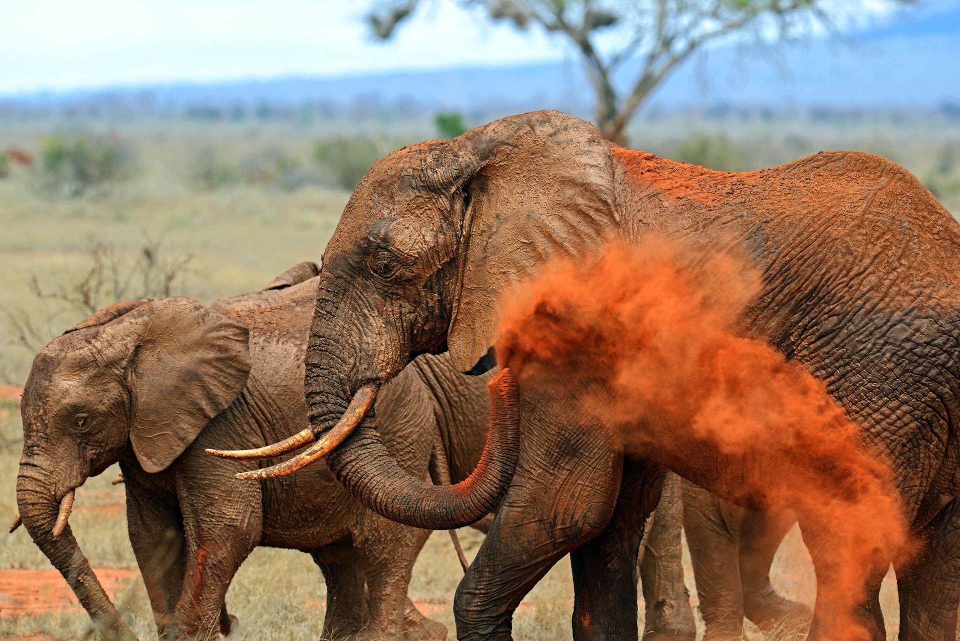An African Love Story by Daphne Sheldrick is set near Tsavo East National Park, Kenya