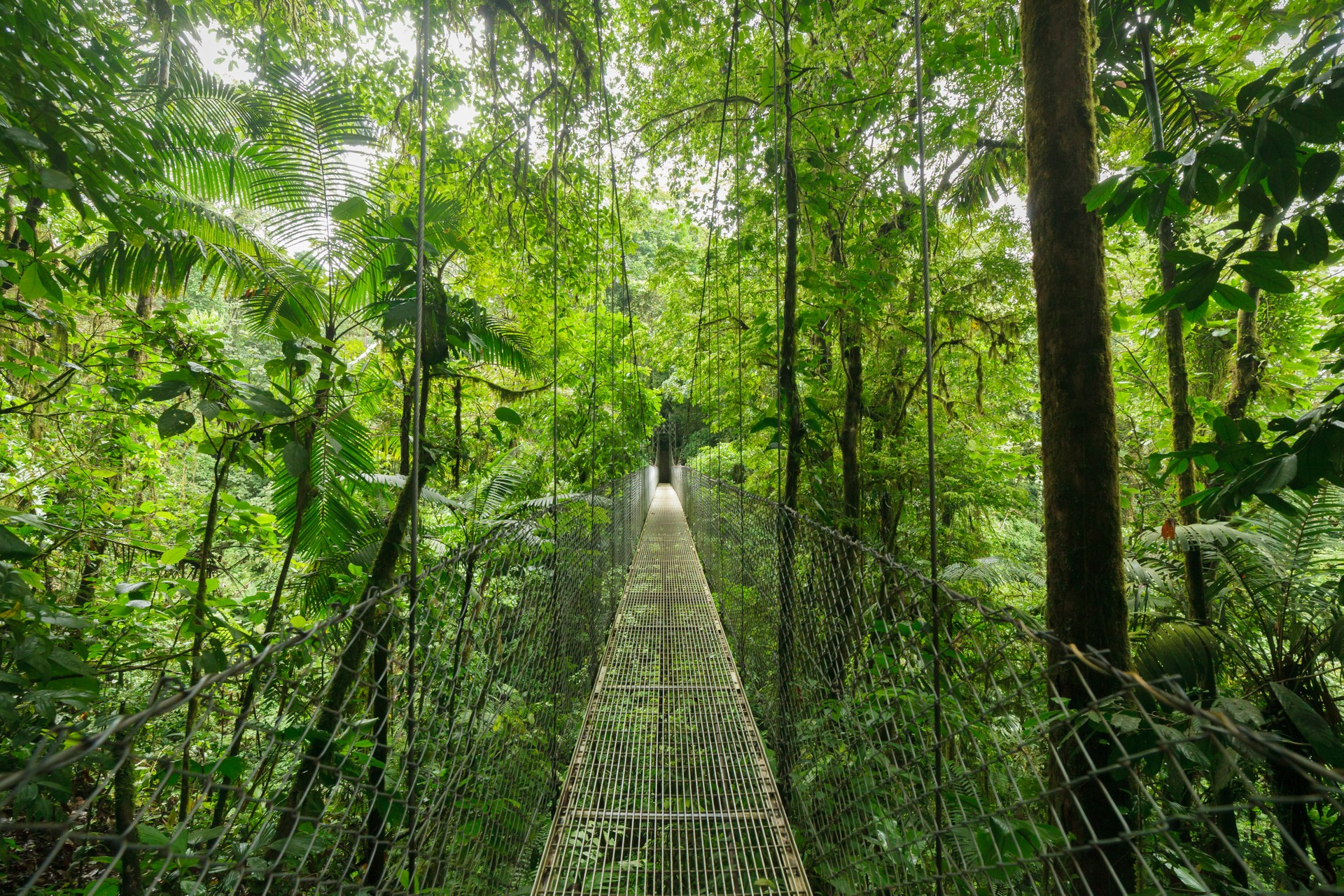 The National Parks of Costa Rica: Monteverde Cloud forest Reserve