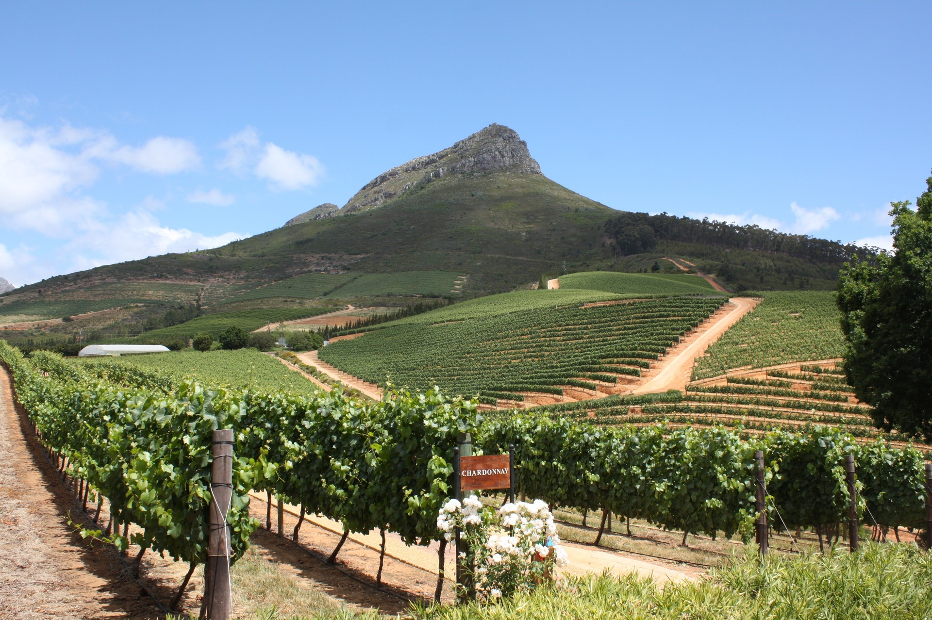 Delaire Graff vineyard in South Africa