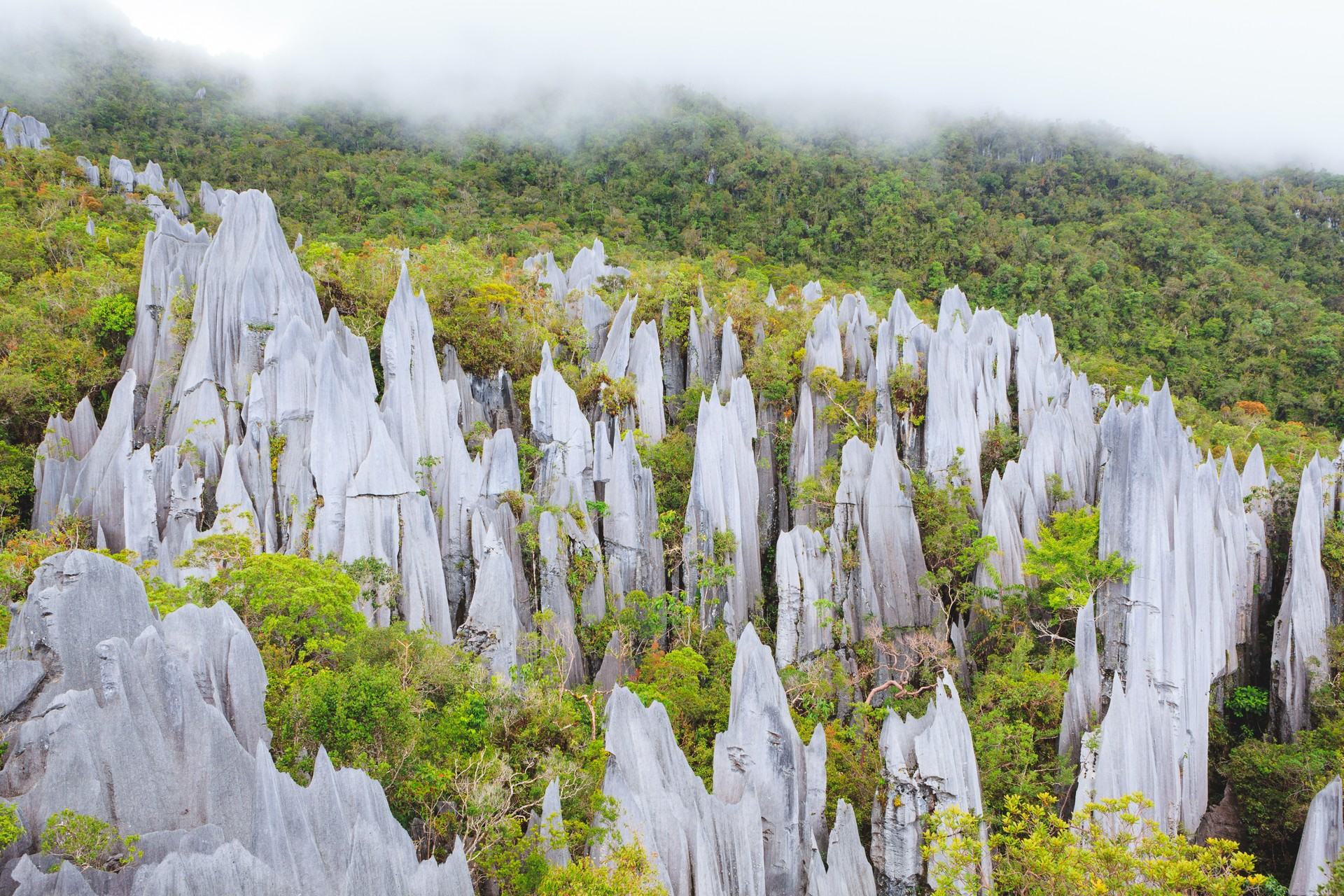 Borneo holidays - Mulu National Park pinnacles