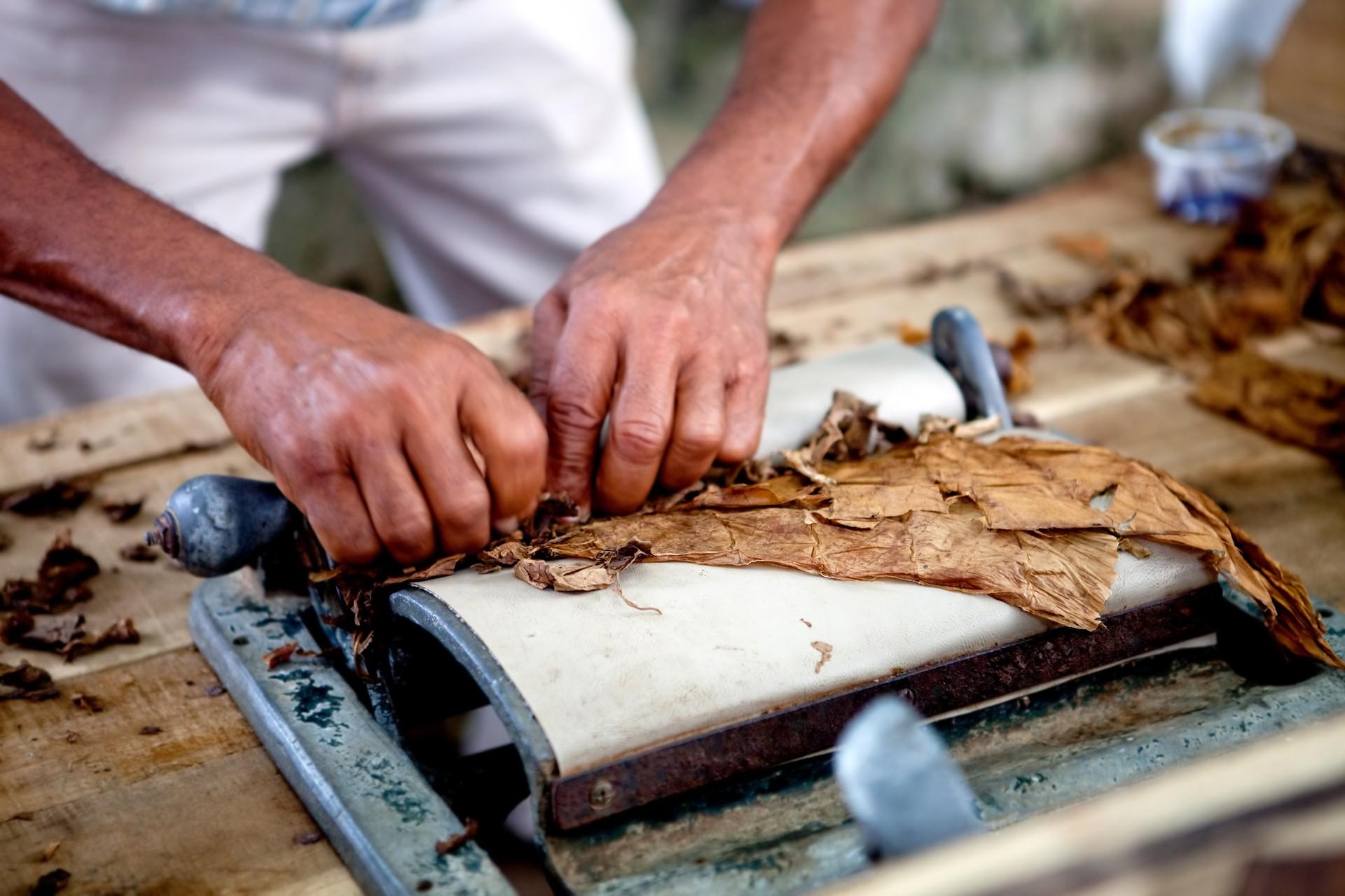 A man crafting a Cuban cigar by hand