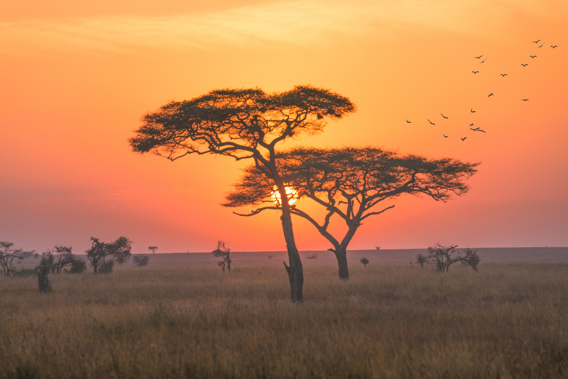 Sunset on the savannah. Kenya