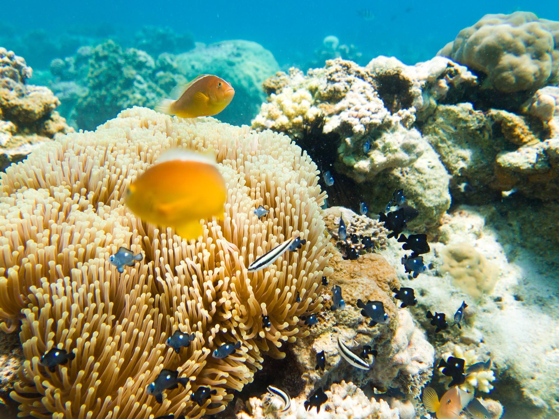 Coral reef in Zanzibar
