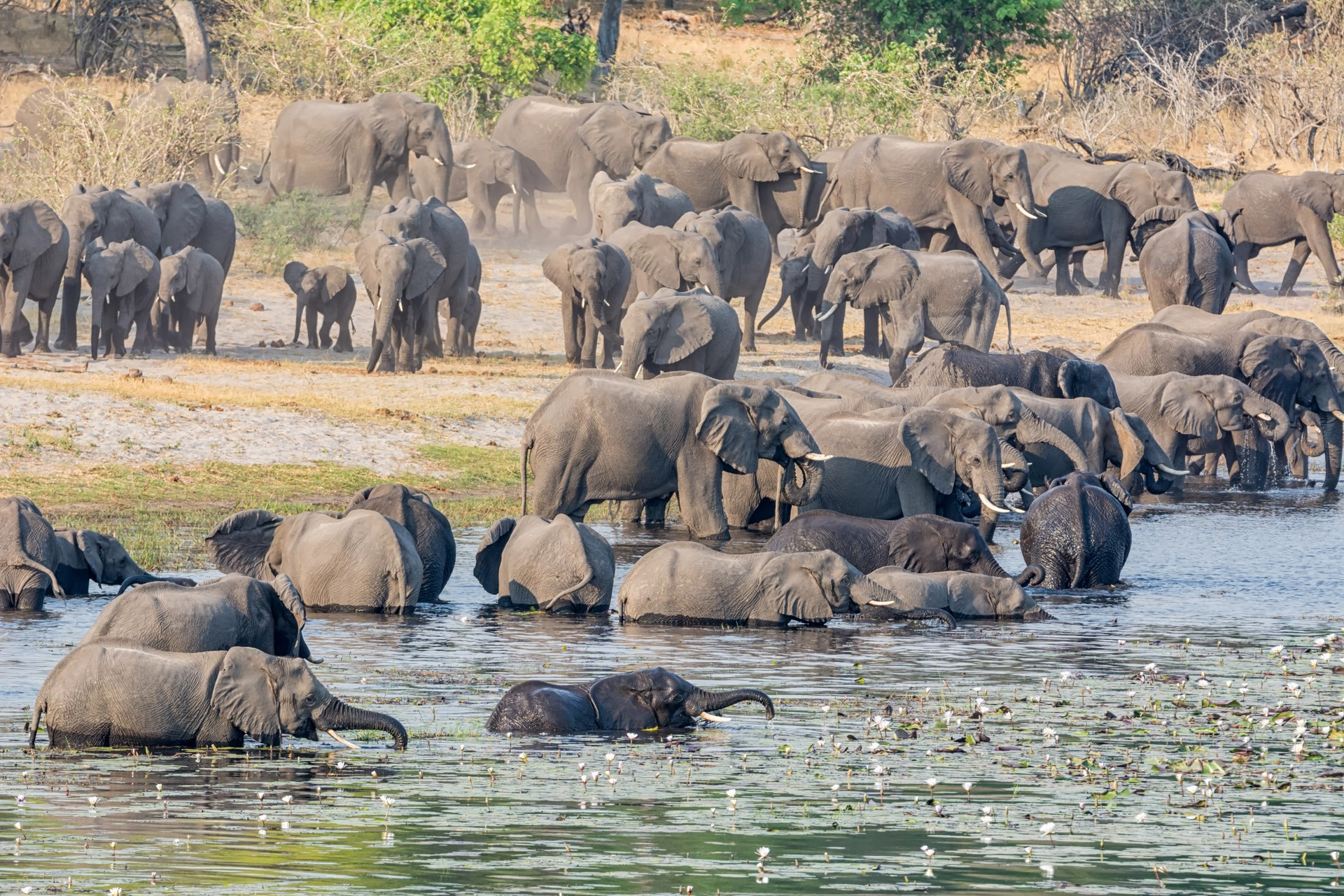 Elephants in Caprivi Strip, Namibia