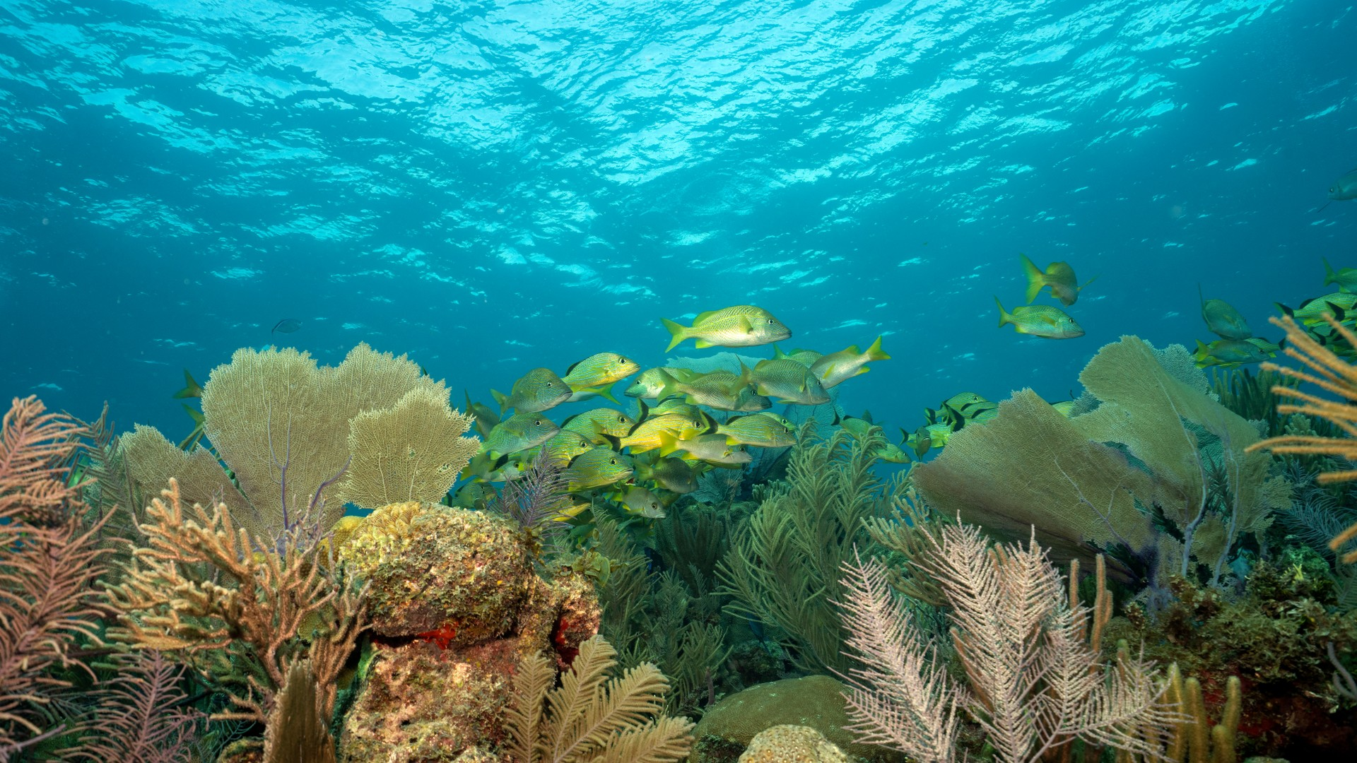Fish and a coral reef in Jardins de la Reina, Cuba