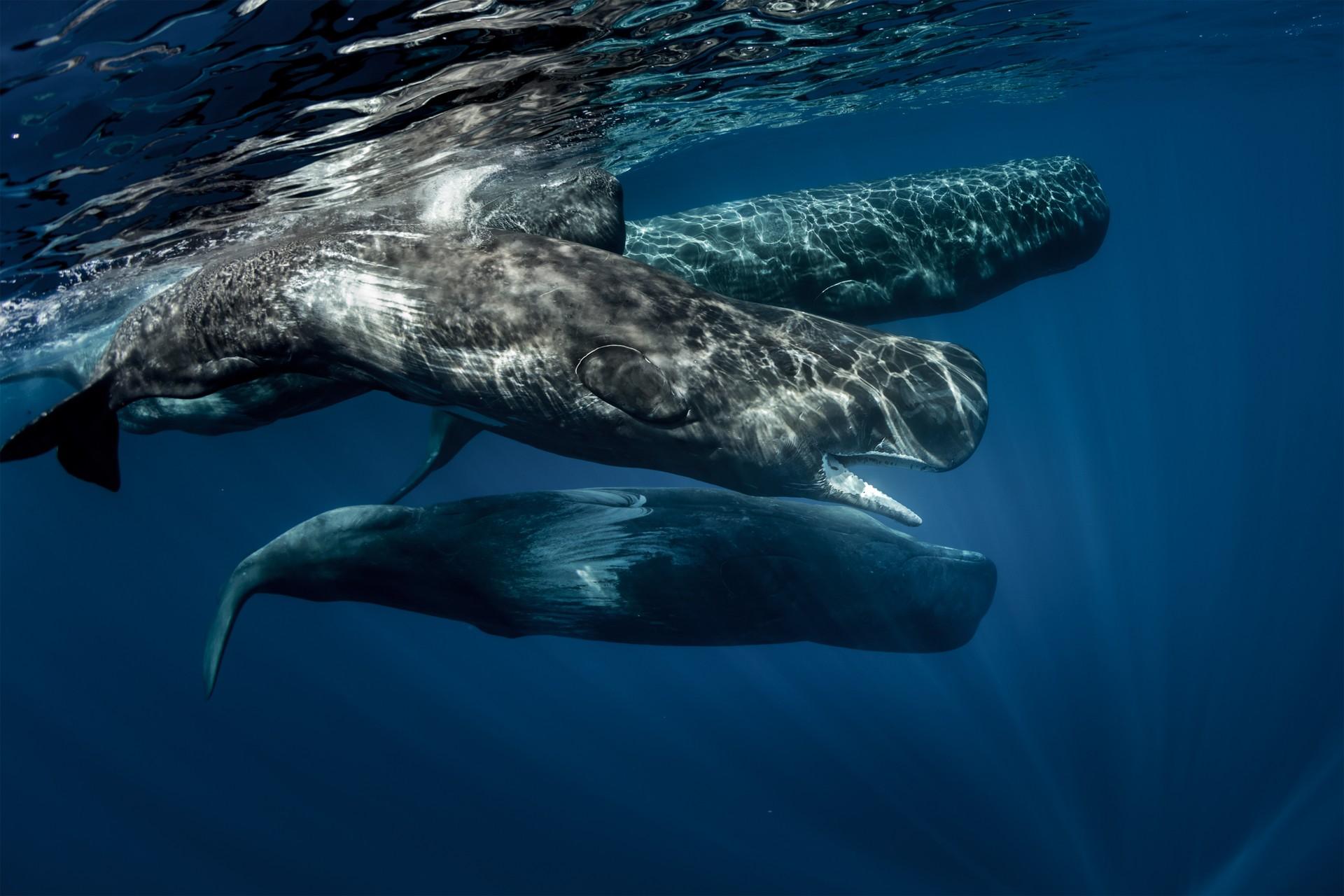 Sri Lanka holidays: whales