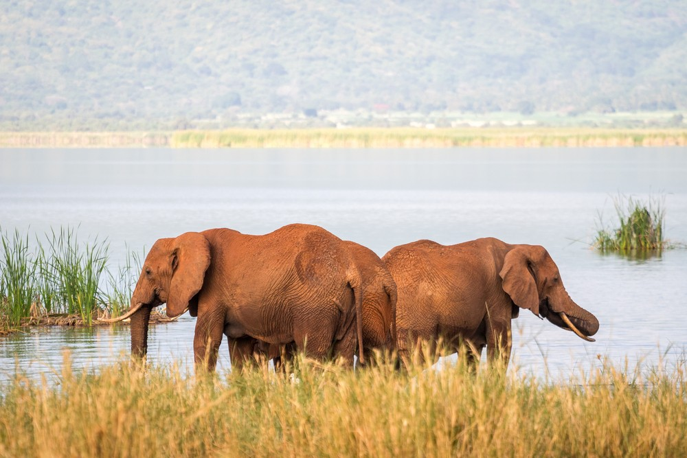 Elephants congregating in Tsavo West National Park
