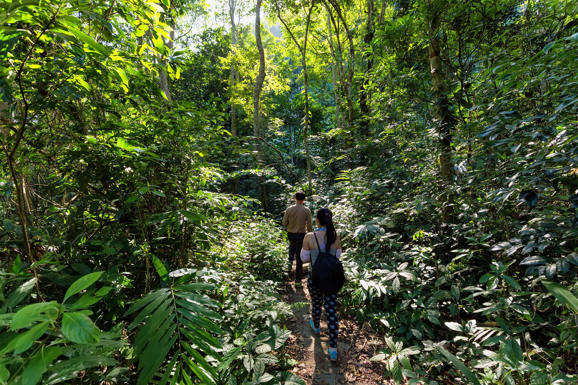 Trekkers in jungle of Cat Ba National Park, Vietnam