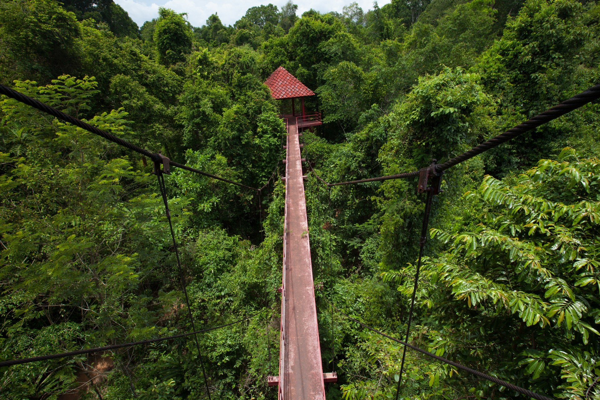 A treetop canopy in the Danum Valley, Malaysia