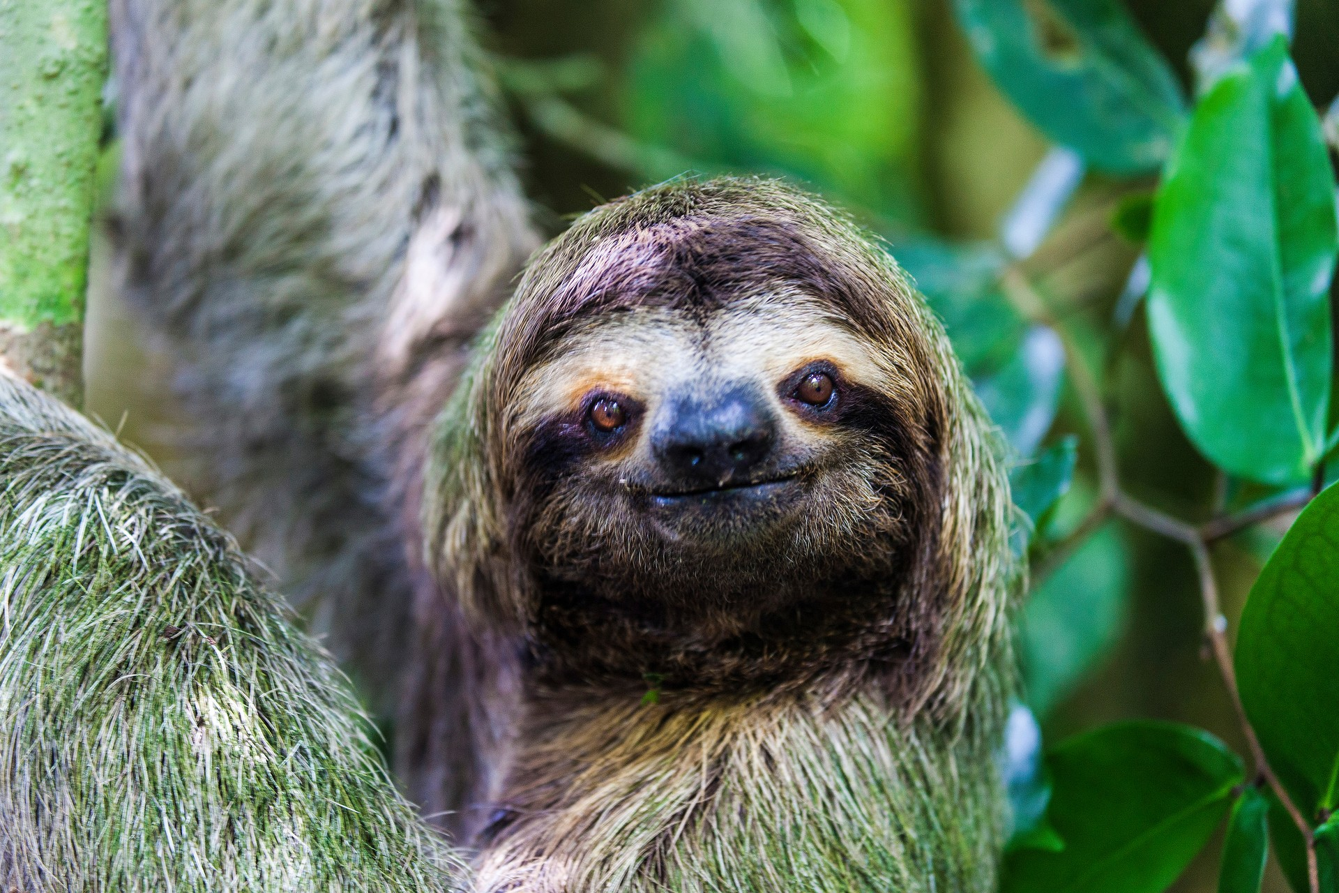 The National Parks of Costa Rica: Sloth