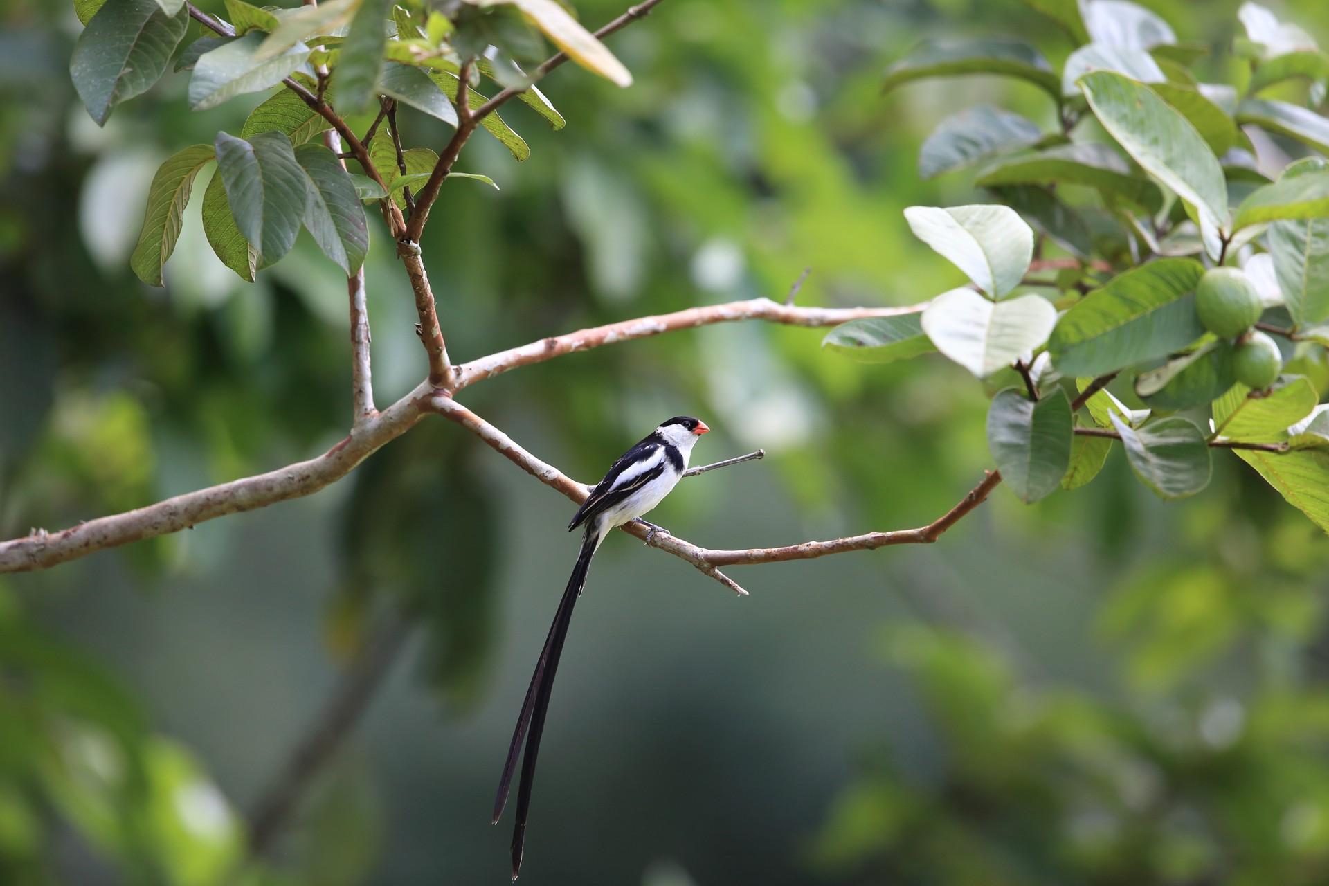Bird in Rwandan rainforest