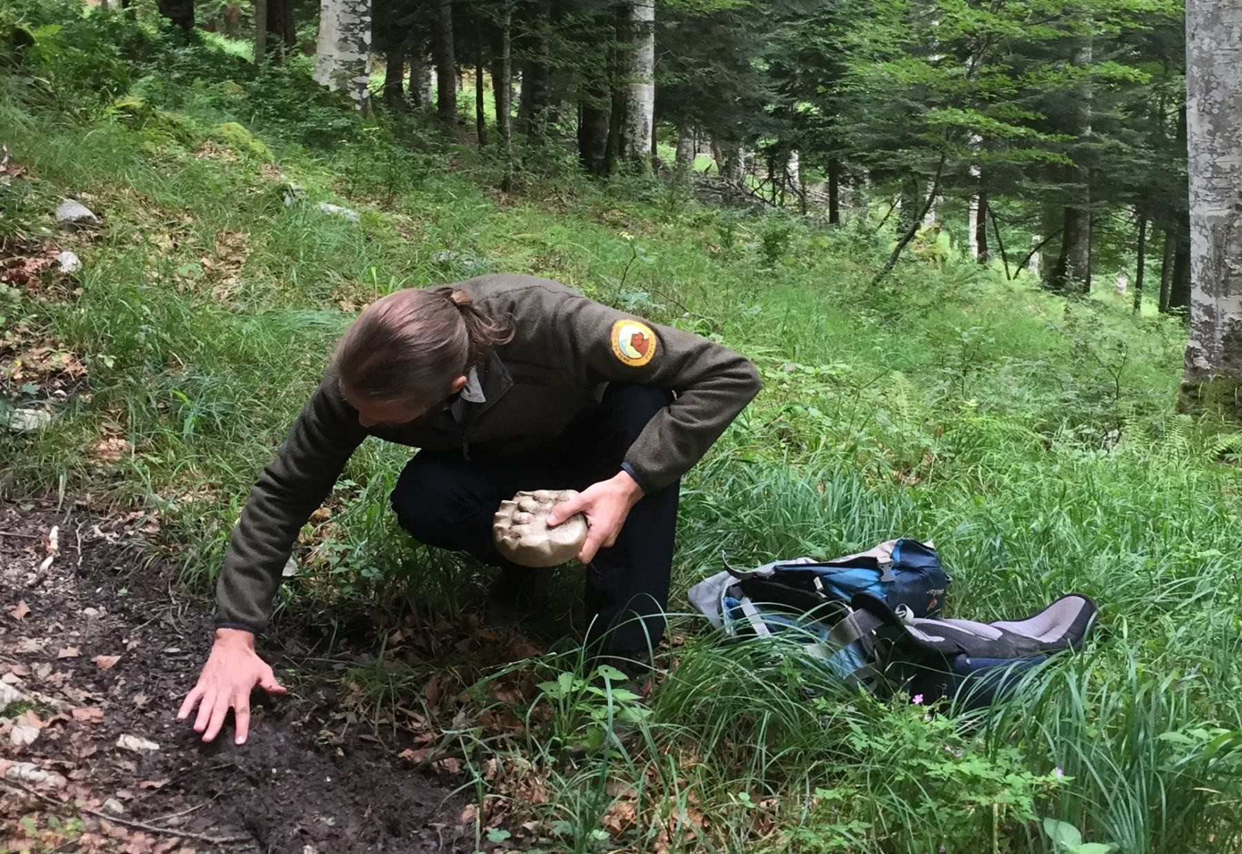Bear tracking in the Pyrenees
