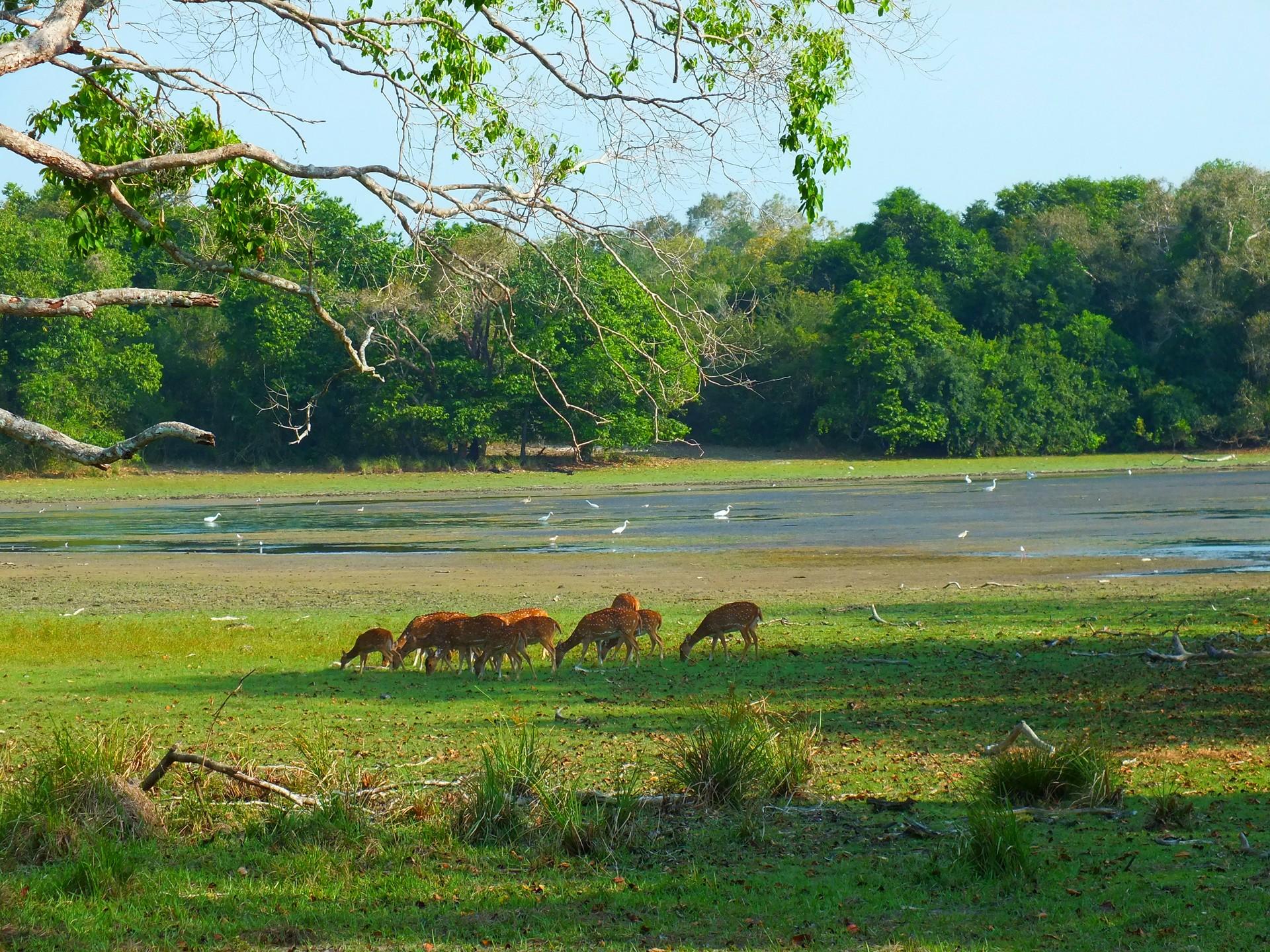 Sri Lanka holidays: Wilpattu National Park