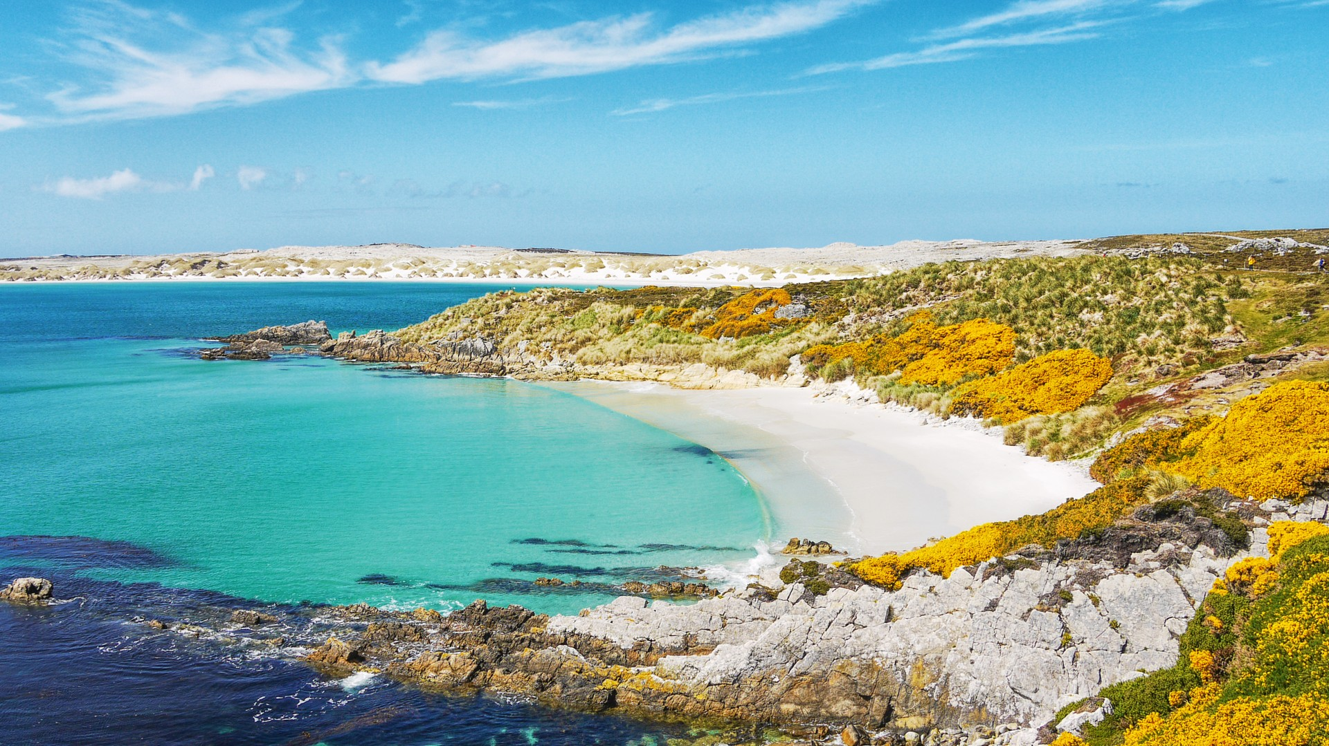 Gypsy Cove Falkland Islands