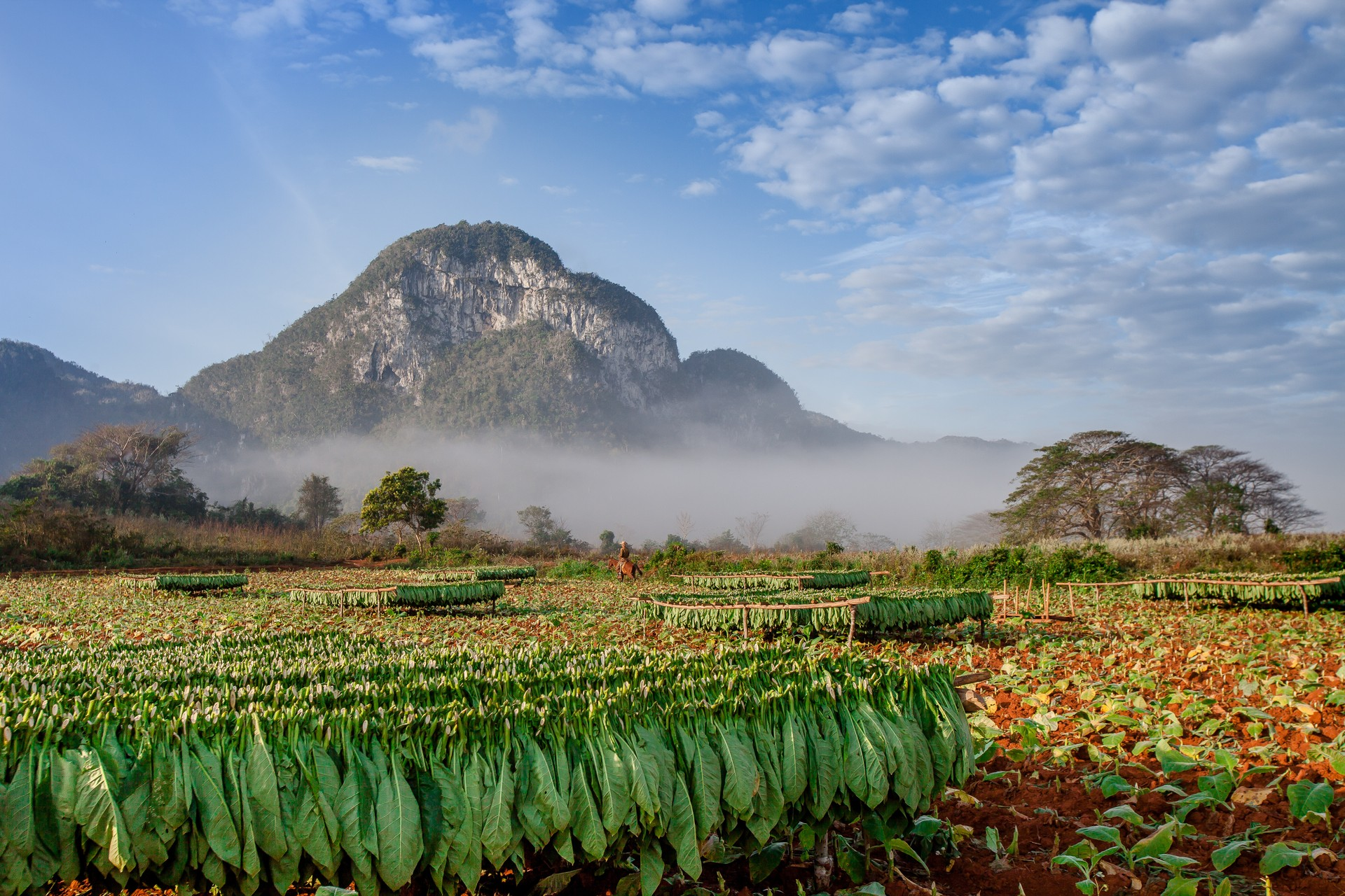 The tobacco fields of Viñales Valley