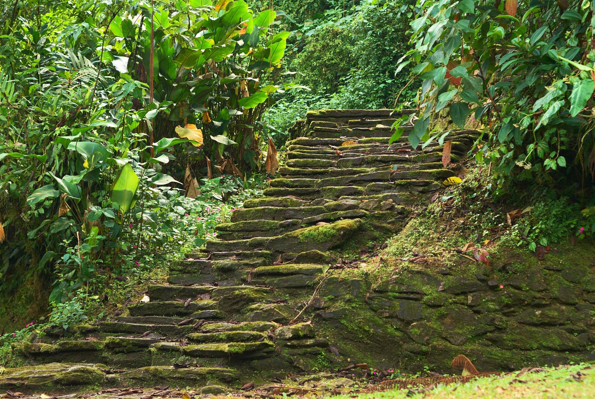 Steps to Ciudad Perdida, Colombia