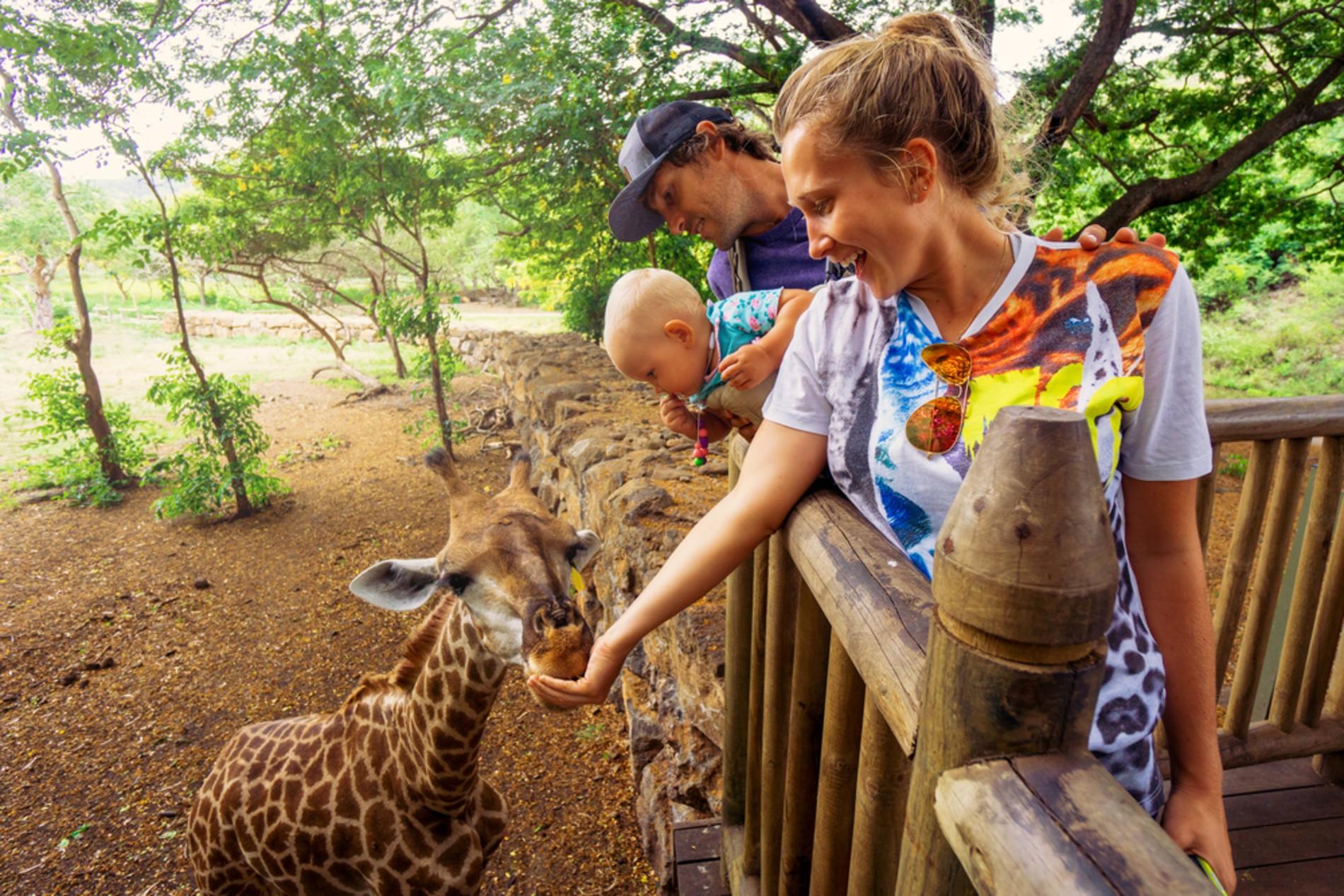 Feeding Giraffes in Nairobi