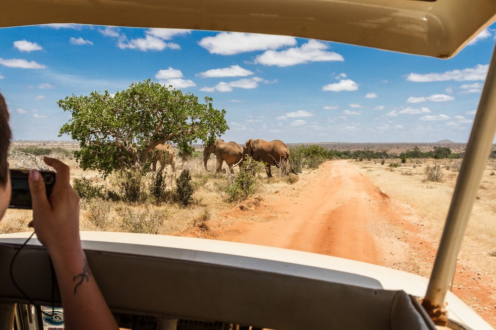 Elephants seen from a safari vehicle in Tsavo East National Park