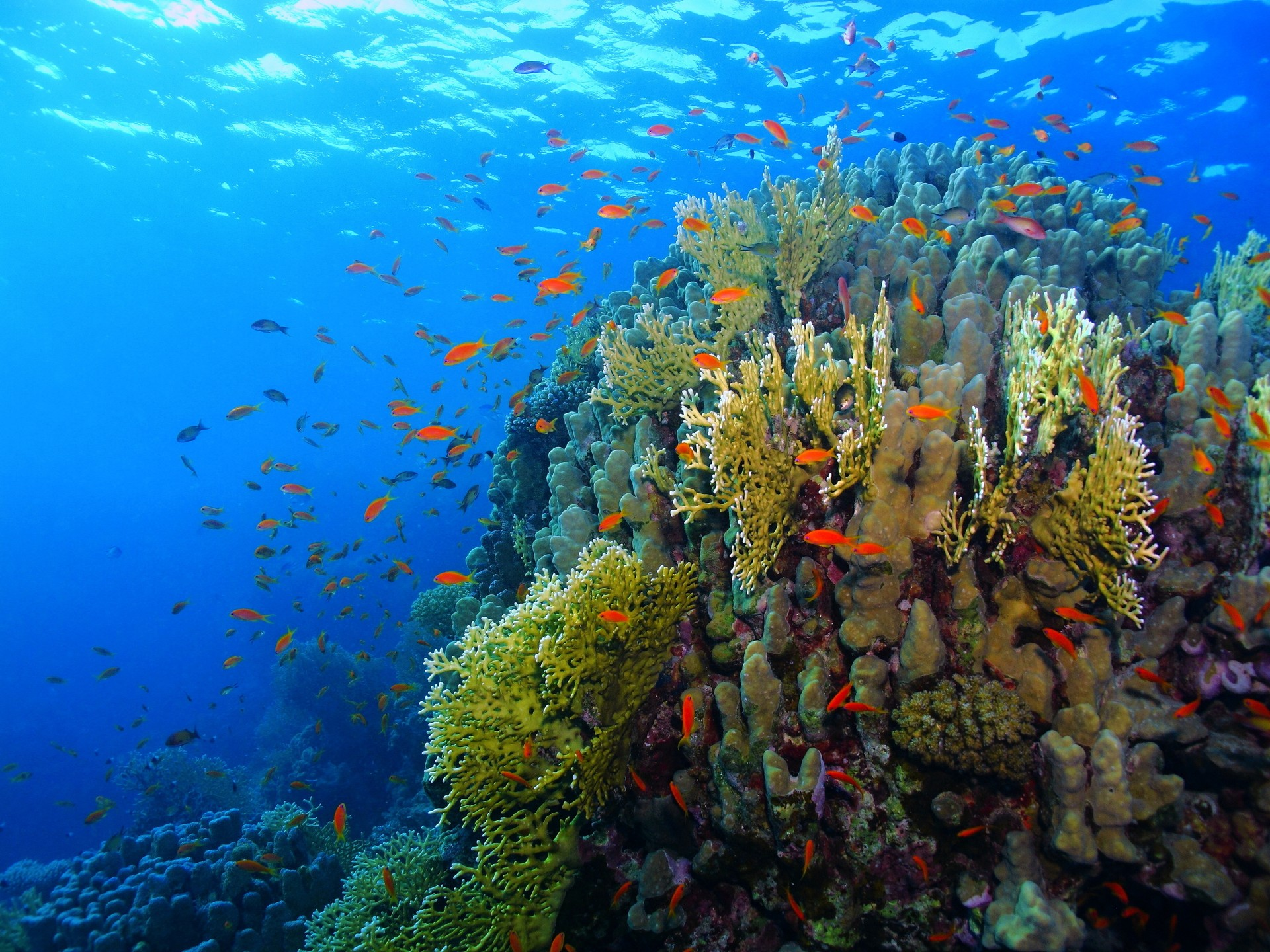 Best things to do in Sudan: Red Sea