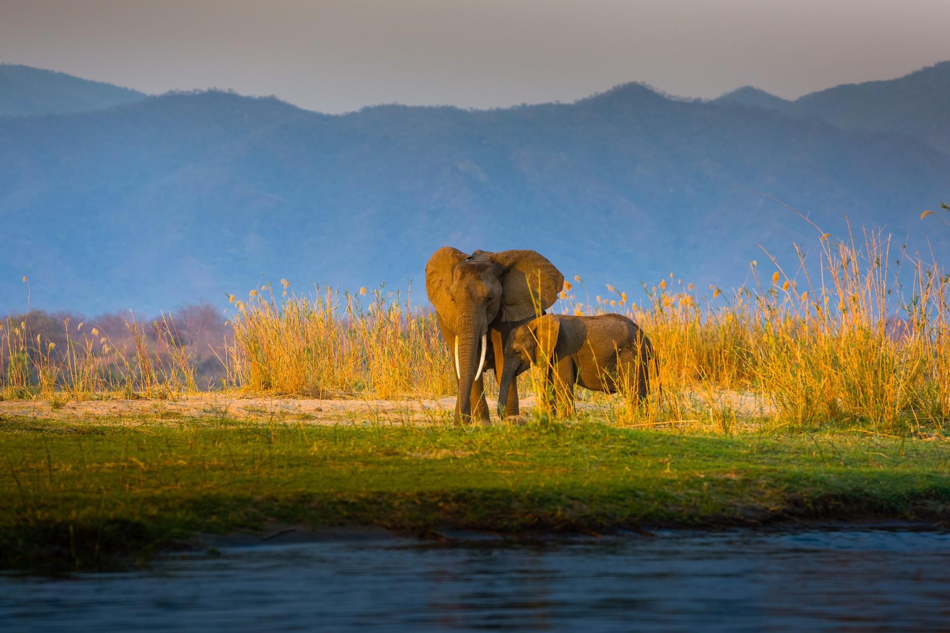 Best things to do in Zambia: Lower Zambezi National Park, Elephants