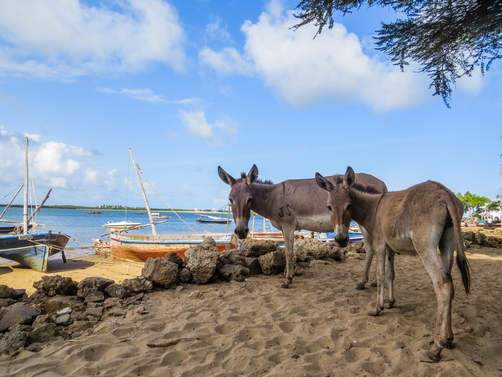 Donkeys on Lamu Beach, Kenya