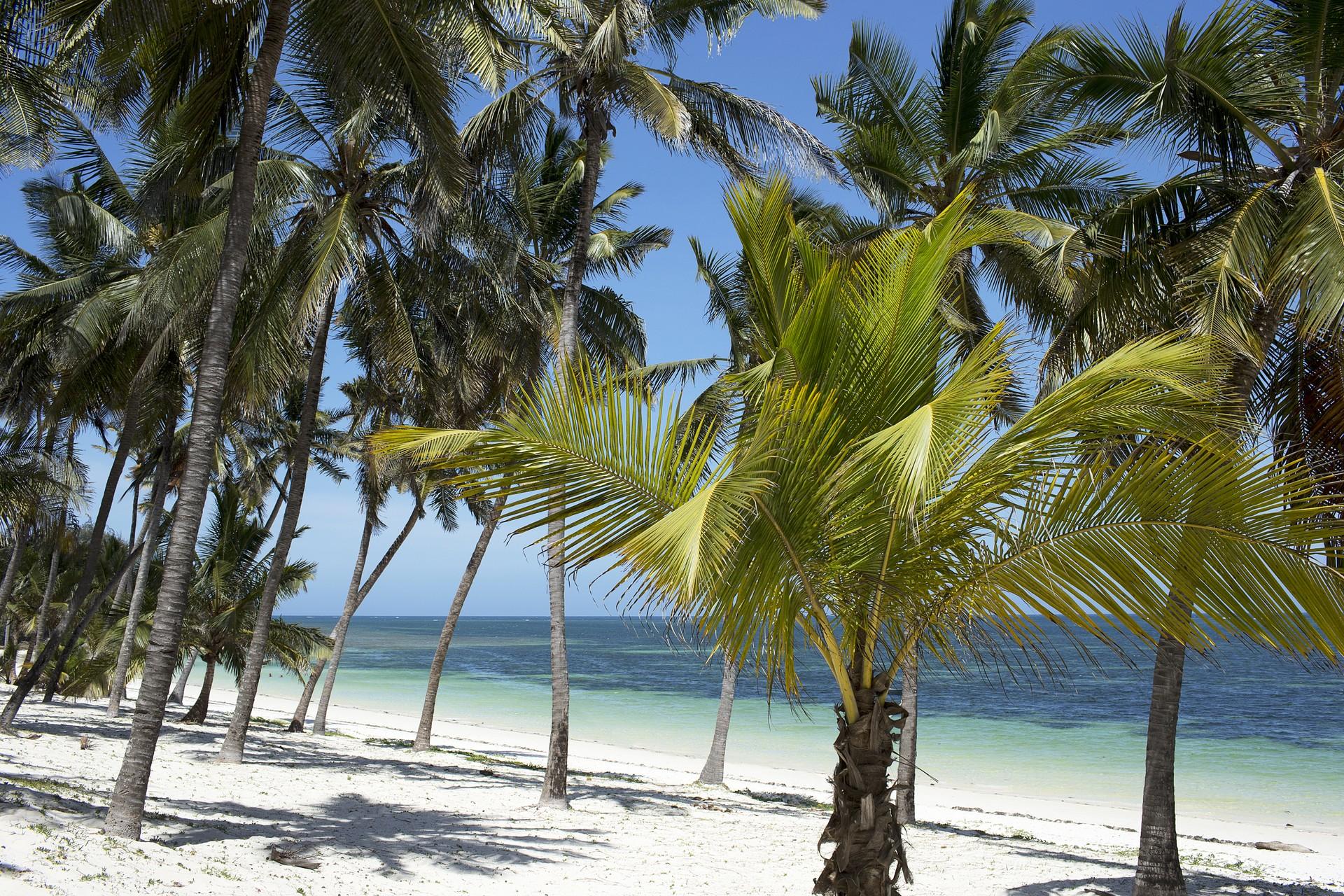Palm trees on Diani Beach, Kenya