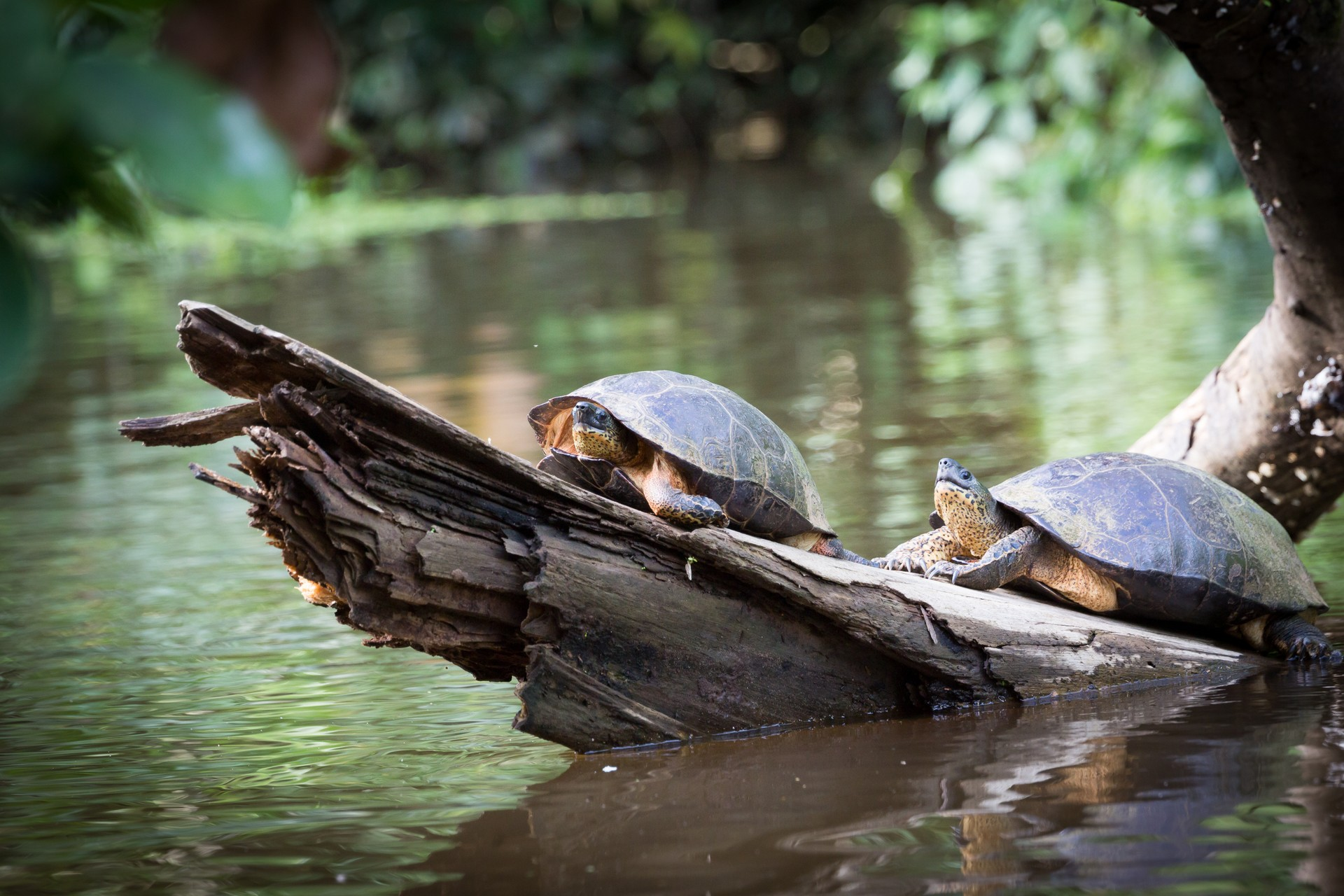 The National Parks of Costa Rica: Turtles