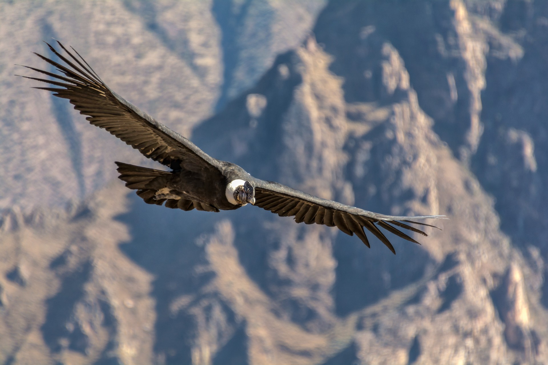 Where to go for Winter Wonderlands: Andean Condors