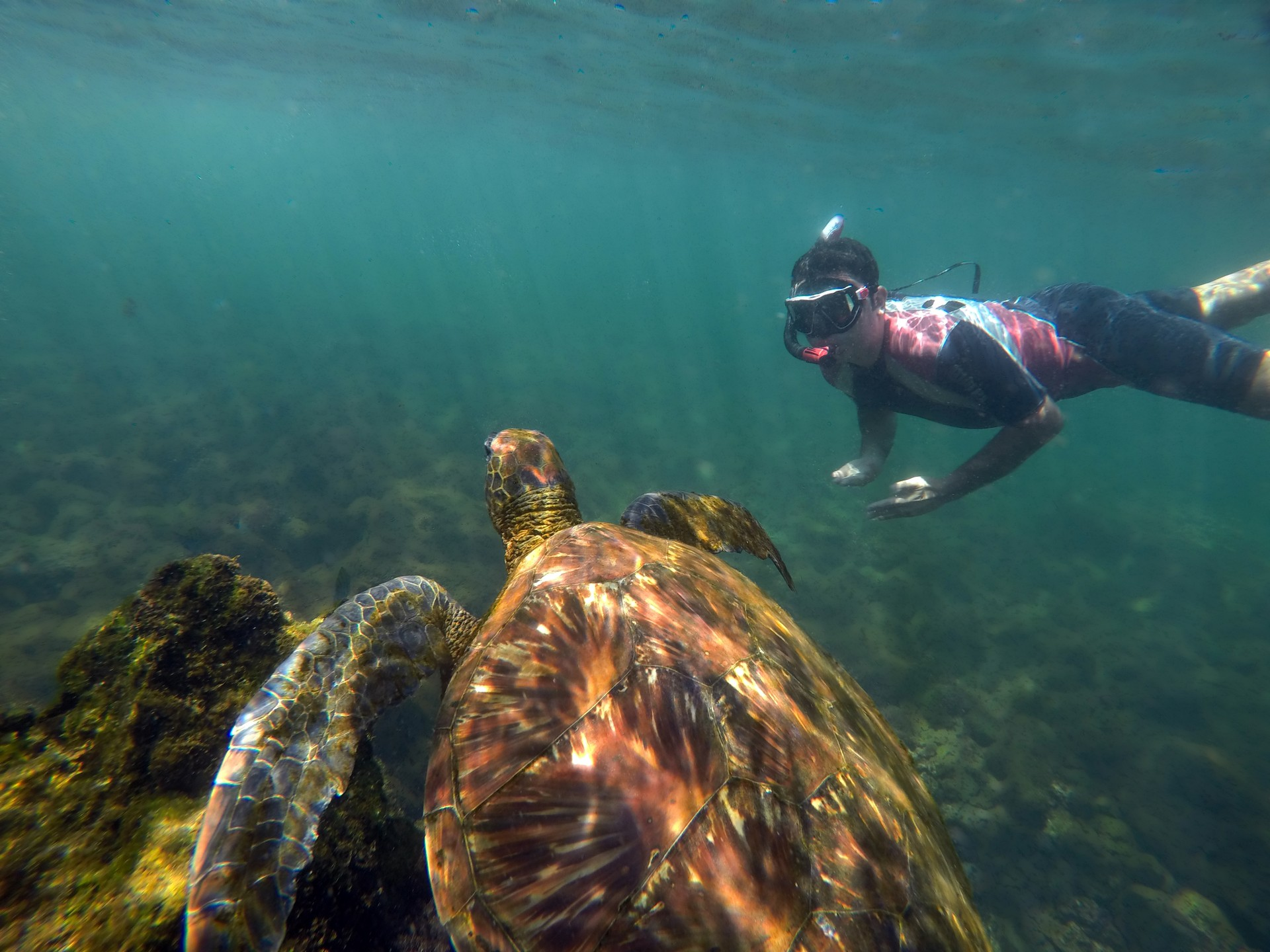 Swimming with turtles Galapagos Islands